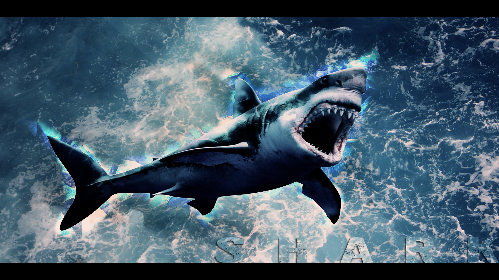 1920x1080 By Alfonso Truesdale PC.516: Funny Shark HD Backgrounds