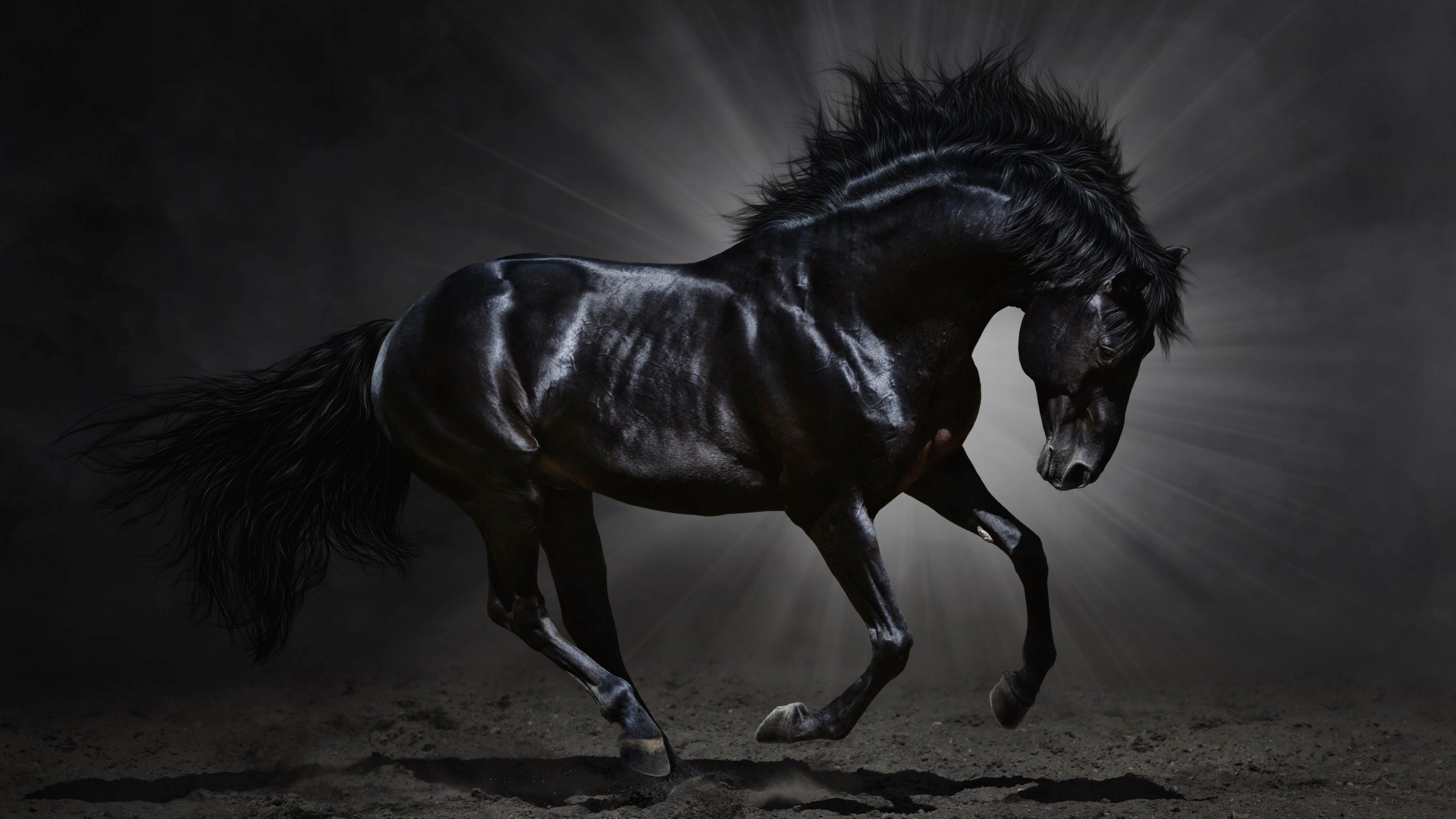 3840x2160 Black Horse Desktop Wallpaper | Download Dark Horse HD wallpaper for 4K  3840 x 2160 -