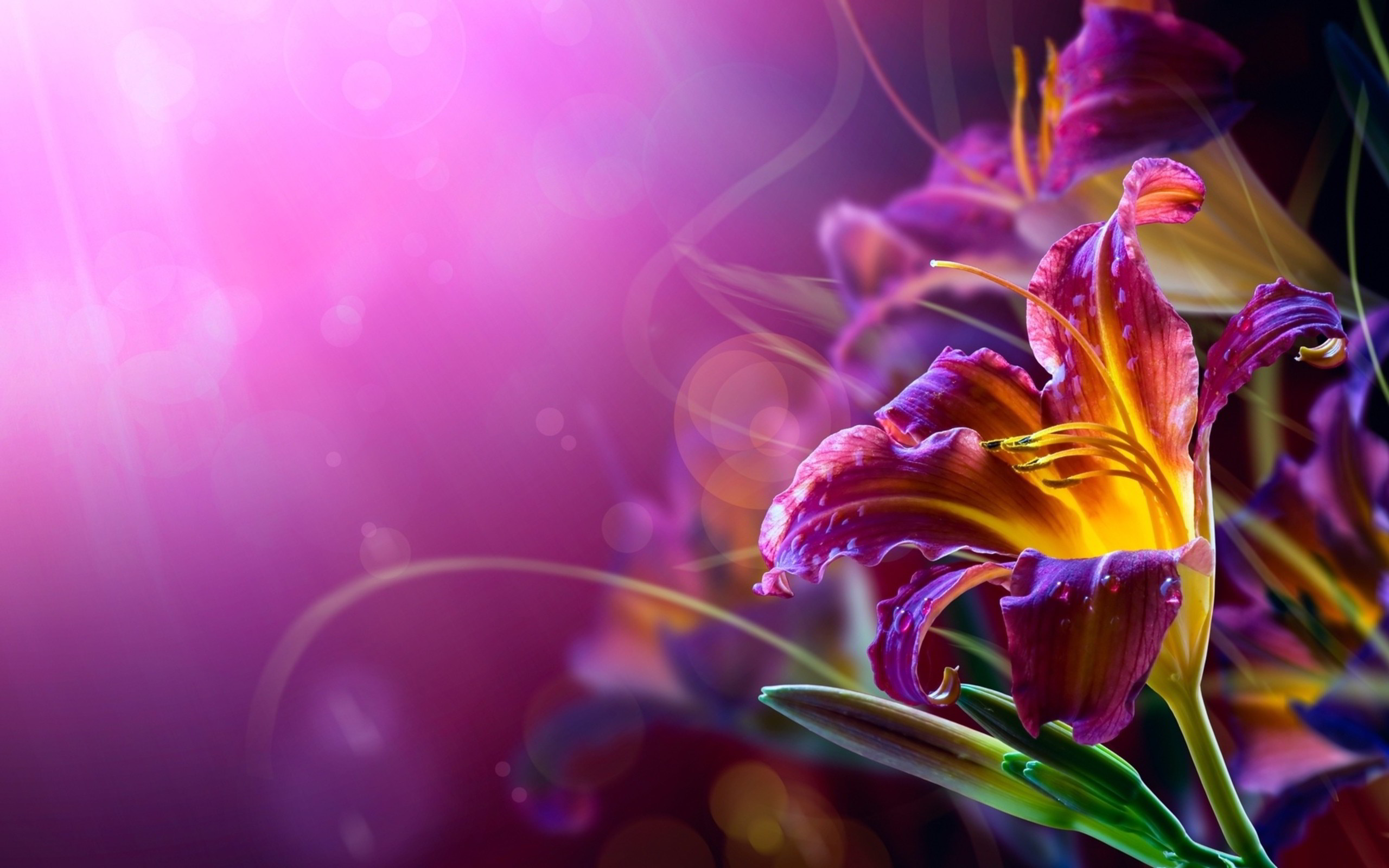 775845 gorgerous cool flower backgrounds