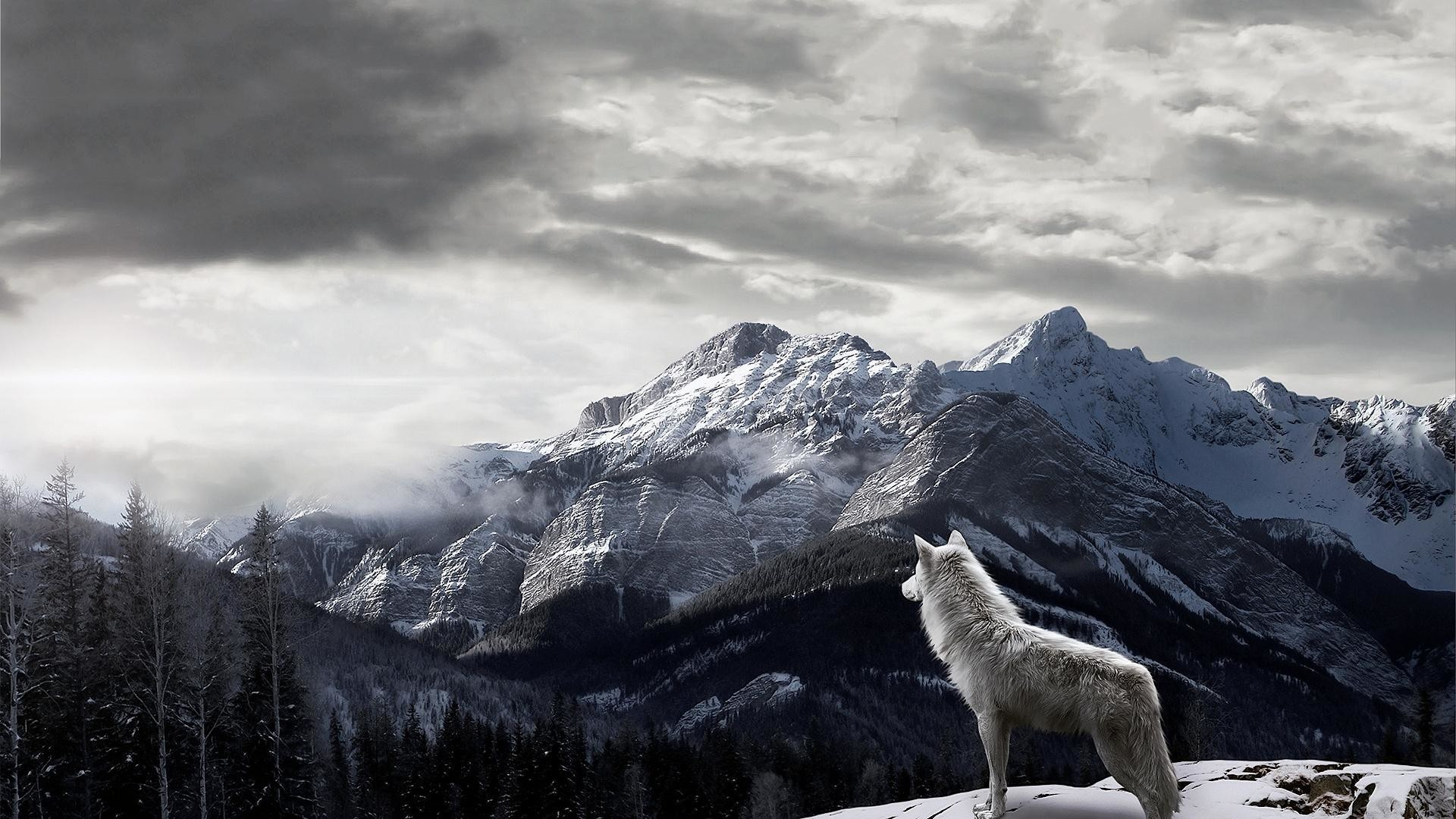 Good Wallpaper Mac Wolf - 888990-lone-wolf-wallpaper-1920x1080-macbook  Snapshot_857926.jpg