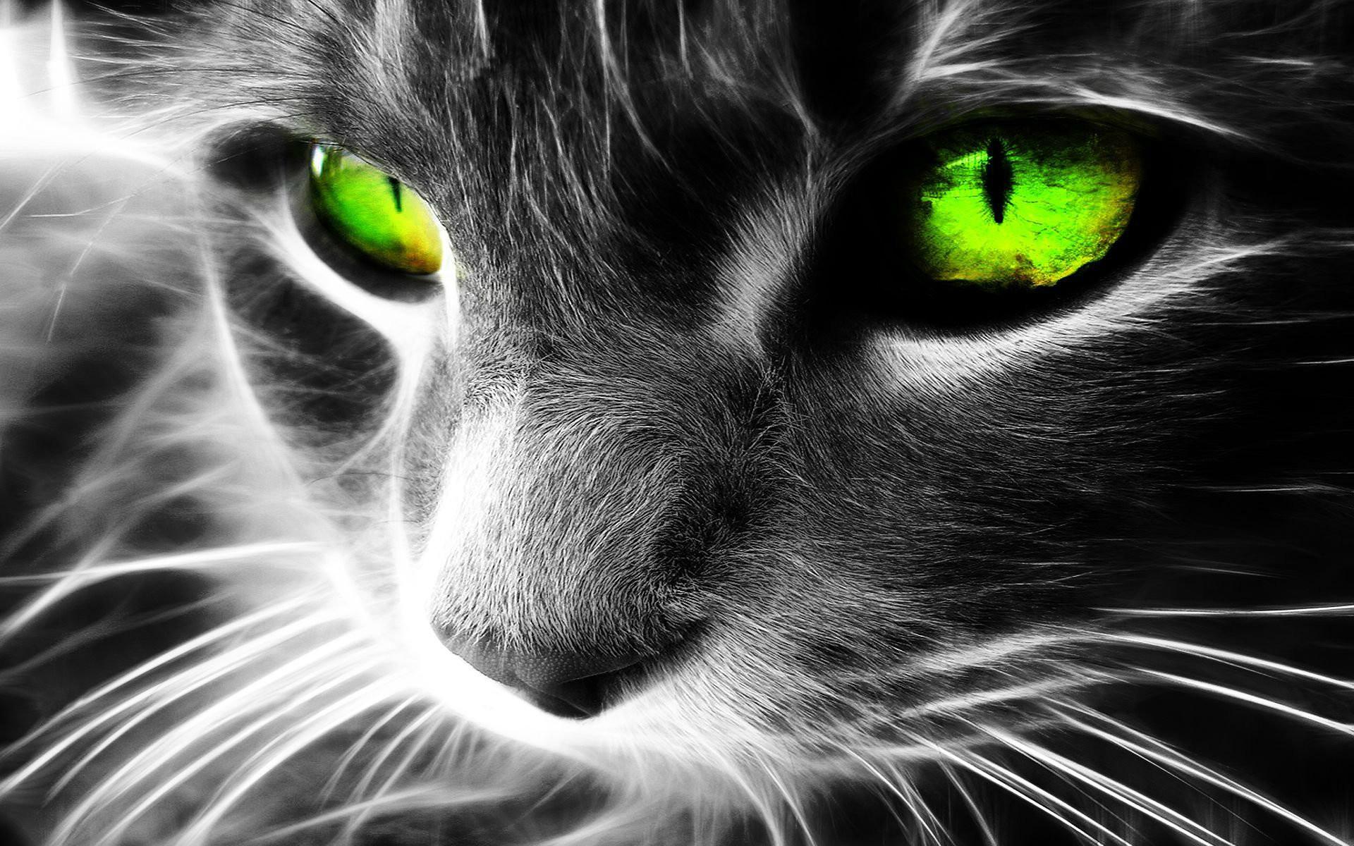 1920x1200 Beautiful 3D Cat Abstract Desktop Background