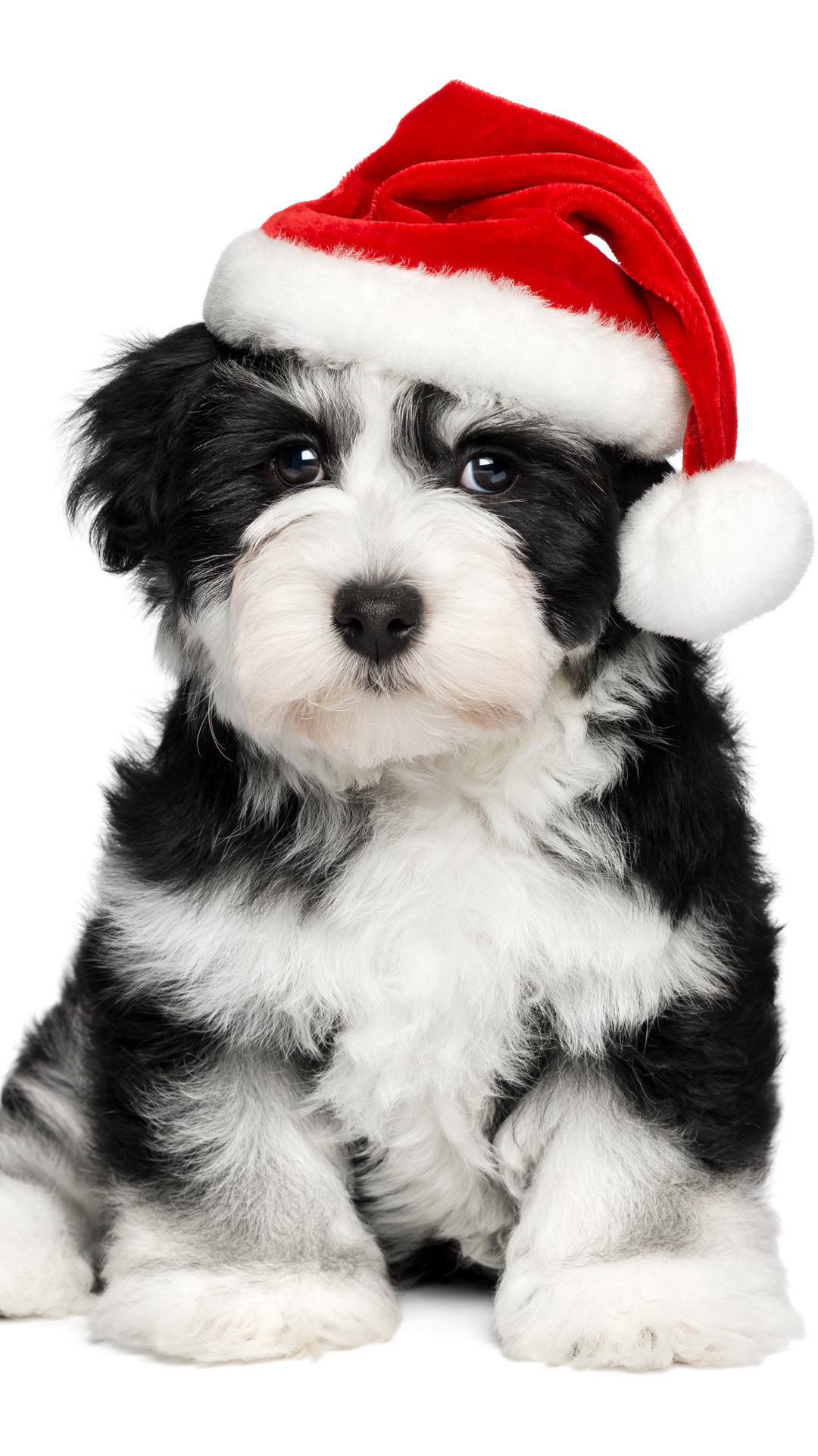 Dogs And Puppies Wallpaper Christmas Puppy Wallpa...