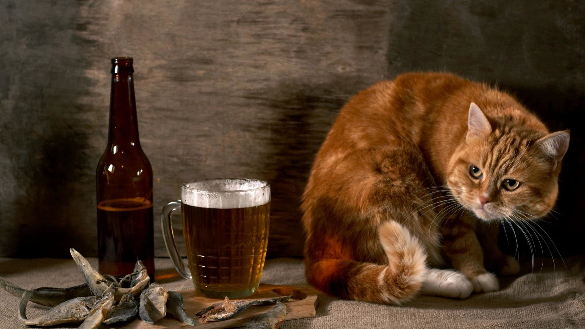 1920x1080 Cat-And-Beer-Funny-Animal-Wallpaper-HD-free-