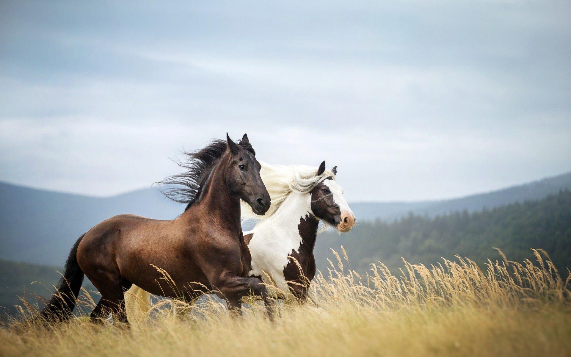 Running Horses Wallpaper 63 Images