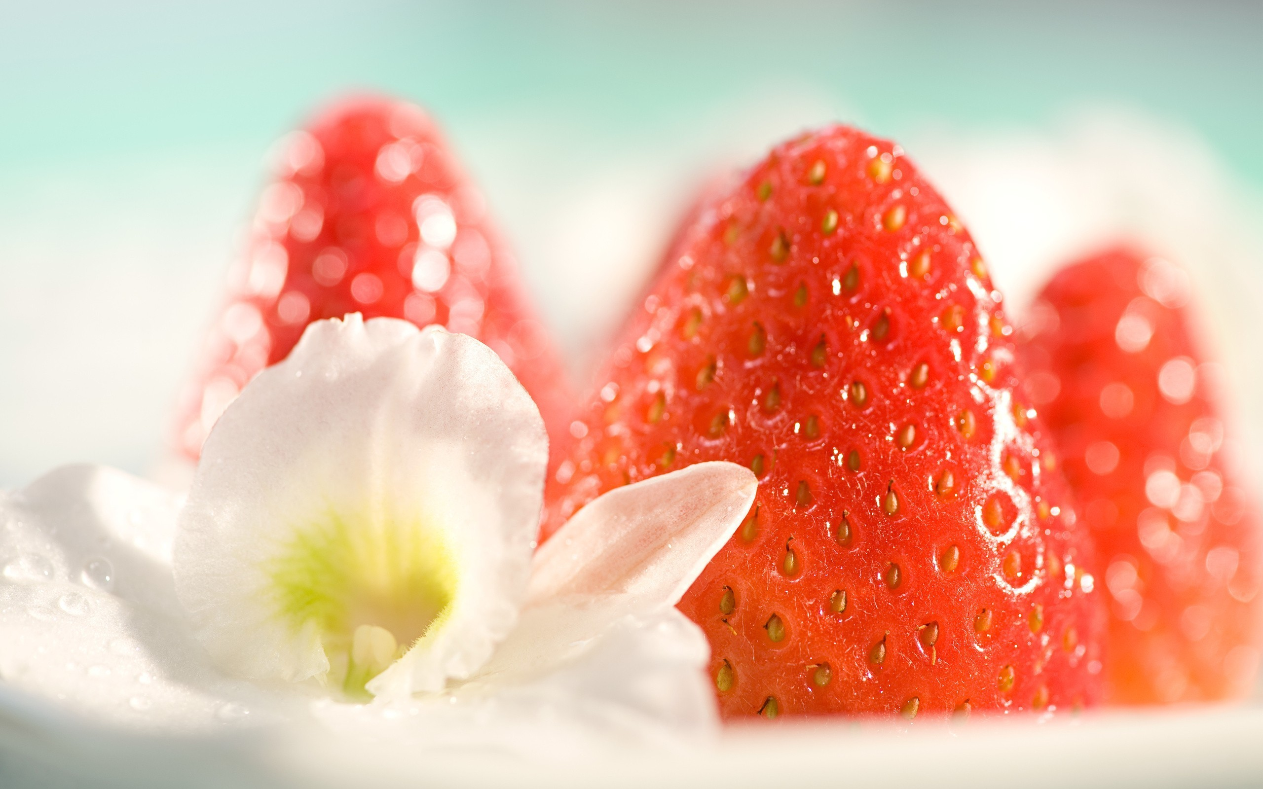 2560x1600 photography macro fruit food flowers strawberries wallpaper and background