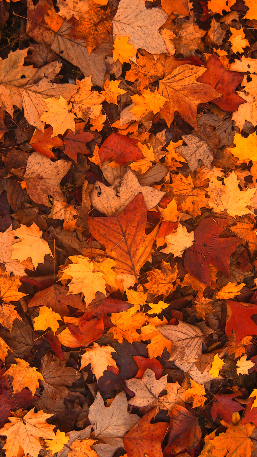 Fall Leaves Wallpaper 73 Images