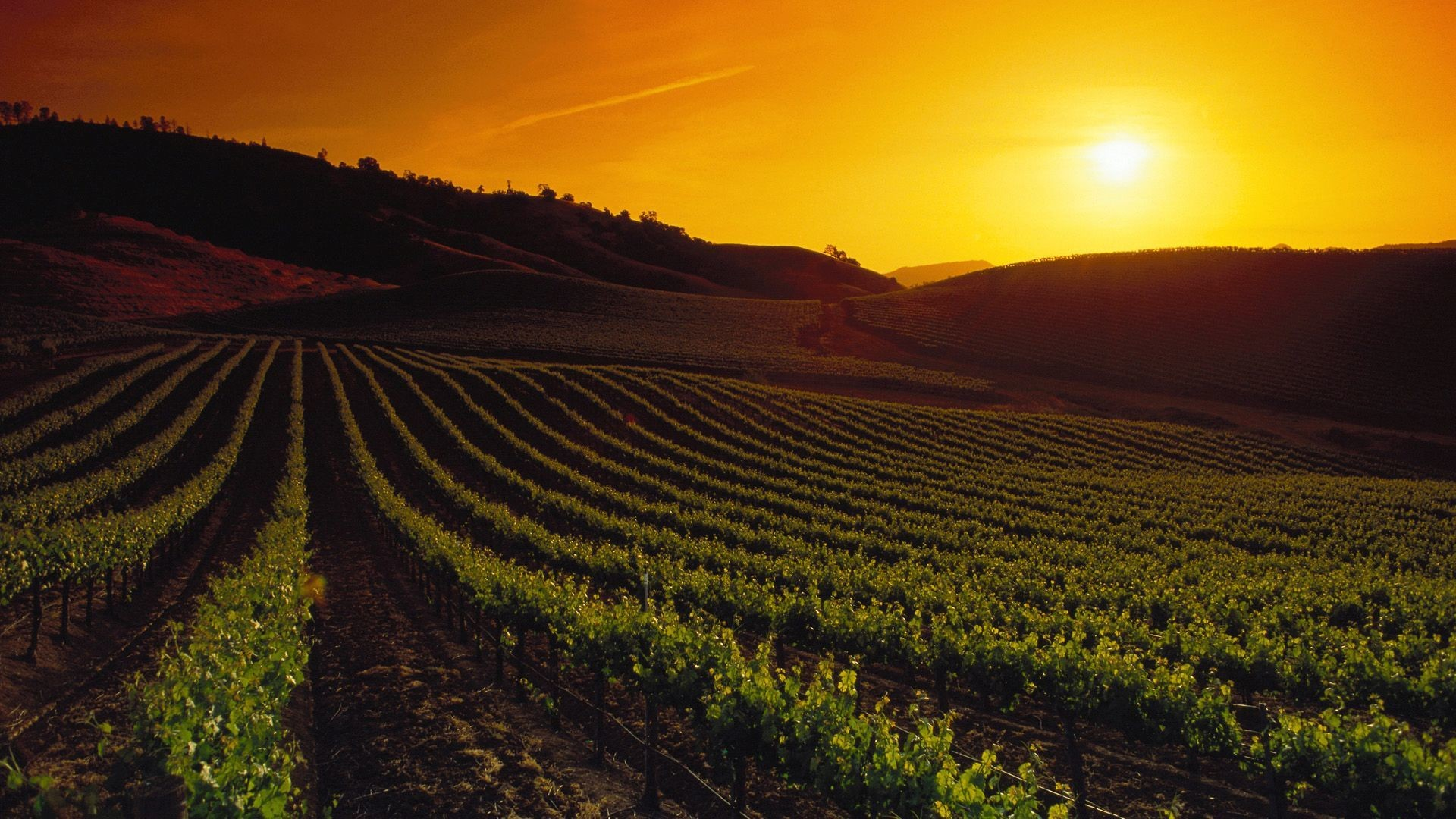1920x1080 Sunset over the vineyard HD Wallpaper