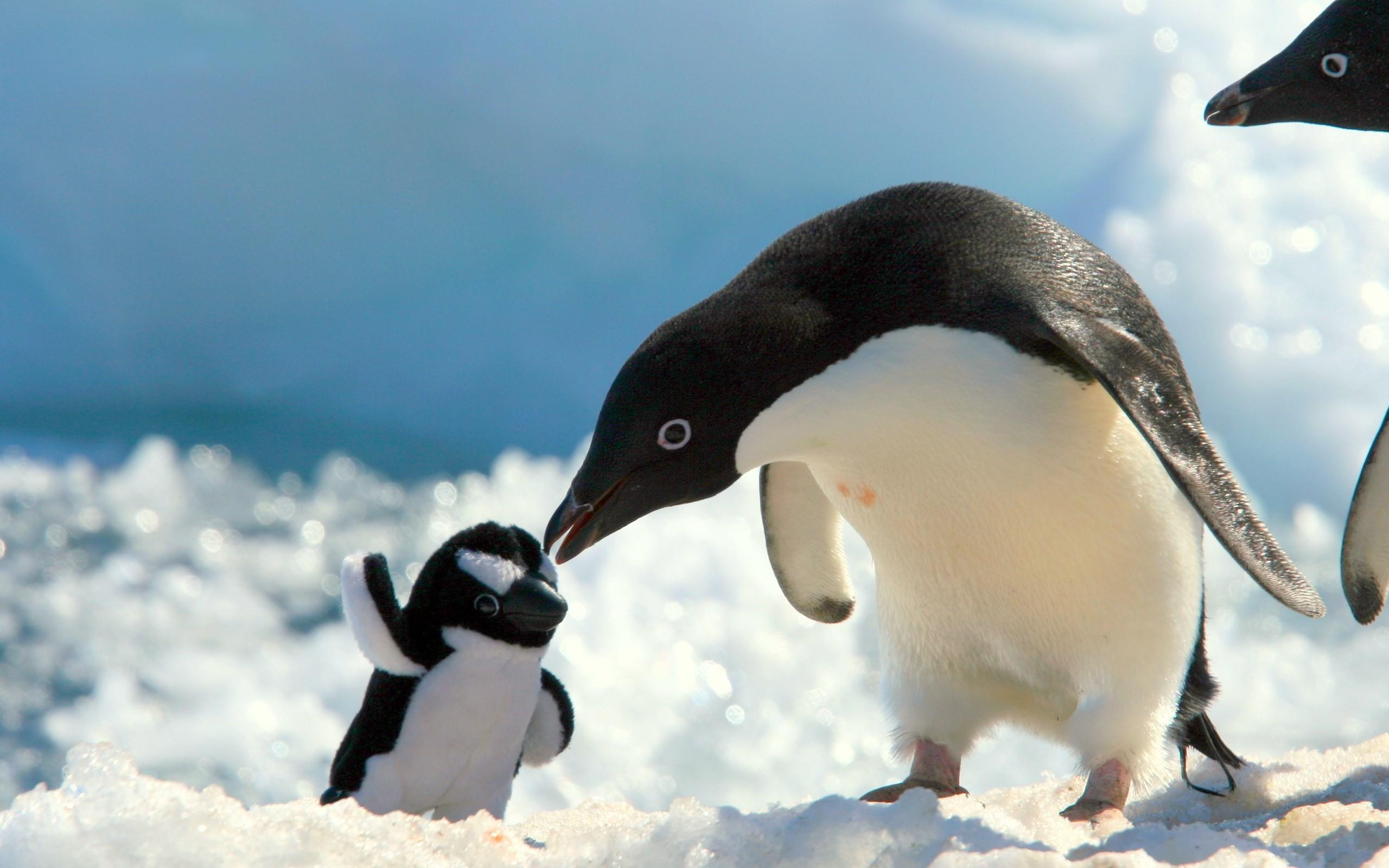 penguin wallpaper screensavers 56 images