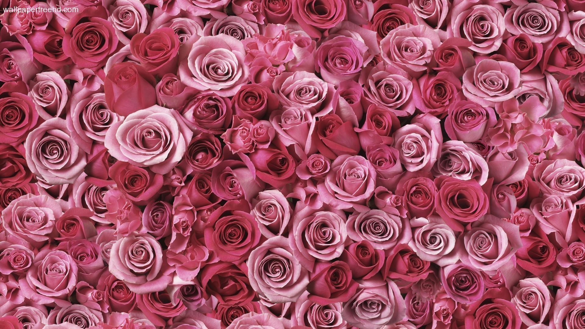 Pink Desktop Wallpaper 73 Images