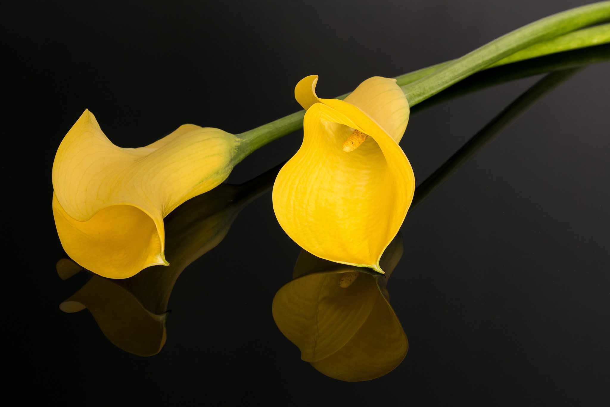 2048x1365 calla lily flower hd wallpapers