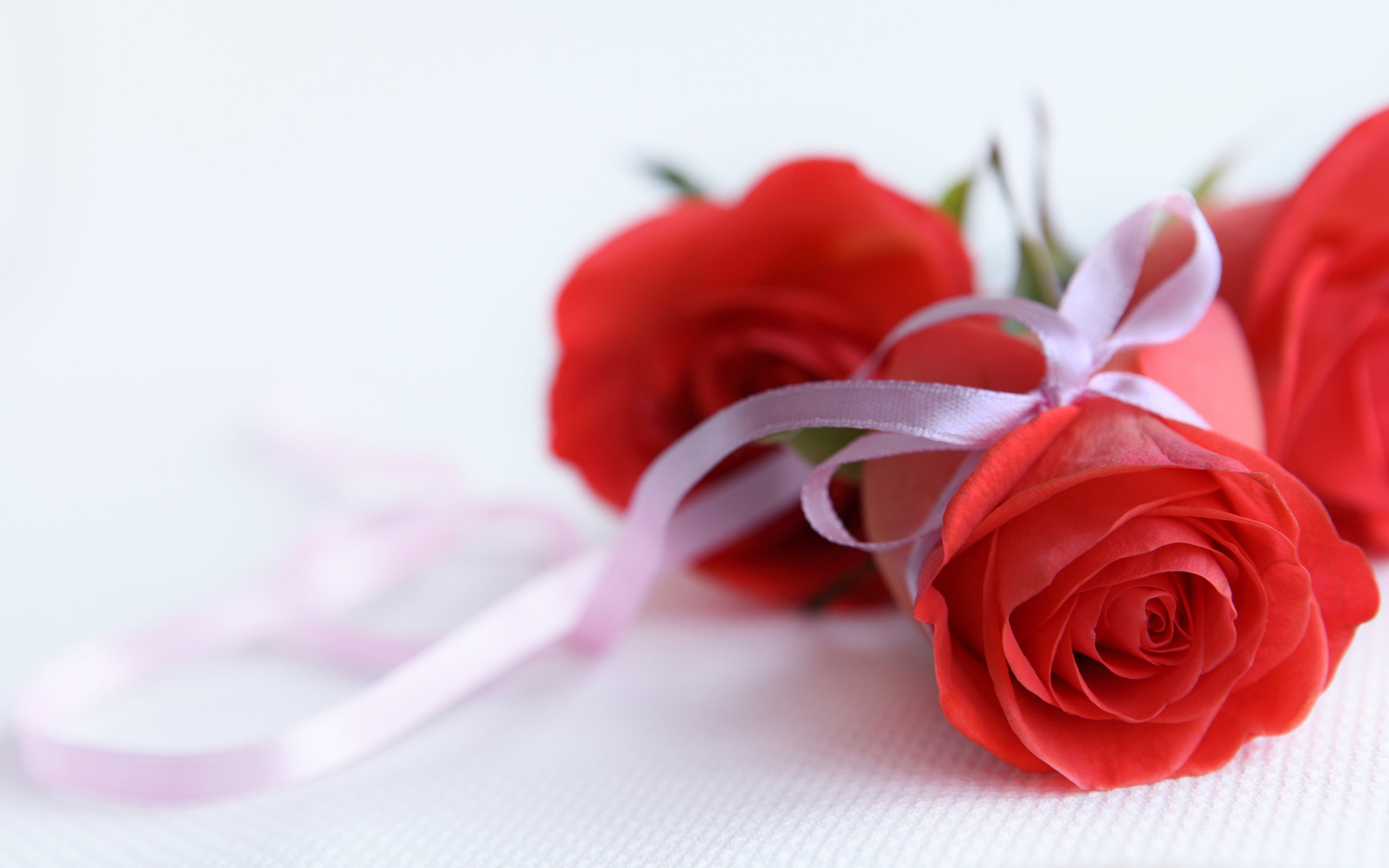 Rose Flower Images Wallpapers (55+ images)