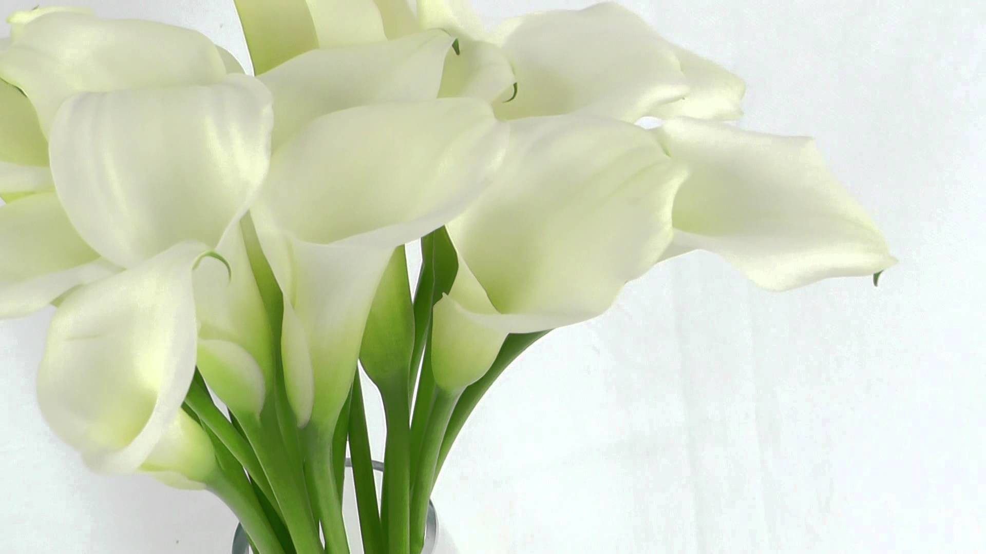 1920x1080 wallpaper.wiki-Download-Calla-Lily-Photo-PIC-WPB008527