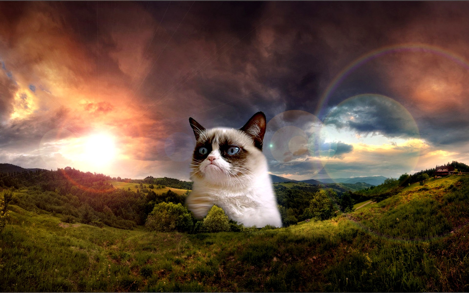 1920x1200 Grumpy Cat. Grumpy Cat No Wallpaper