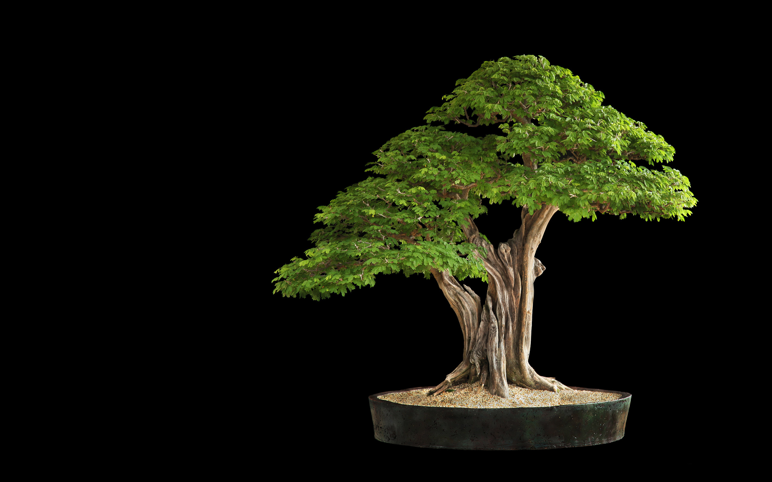 2560x1600 organic,tree, leaves, lovely, bonsai,cool, smart phone, mac wallpaper,  lovely place tree, Wallpaper HD
