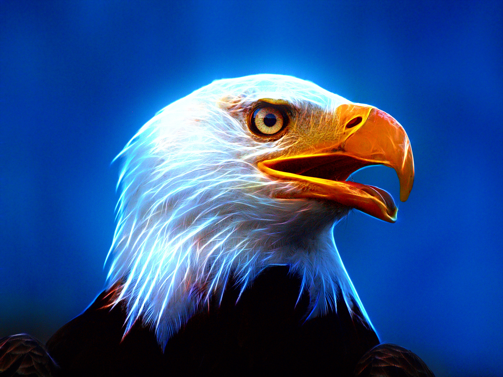 1920x1440 Eagle Wallpapers, Download Eagle HD Wallpapers for Free, GuoGuiyan  1920×1440 Eagle Wallpapers