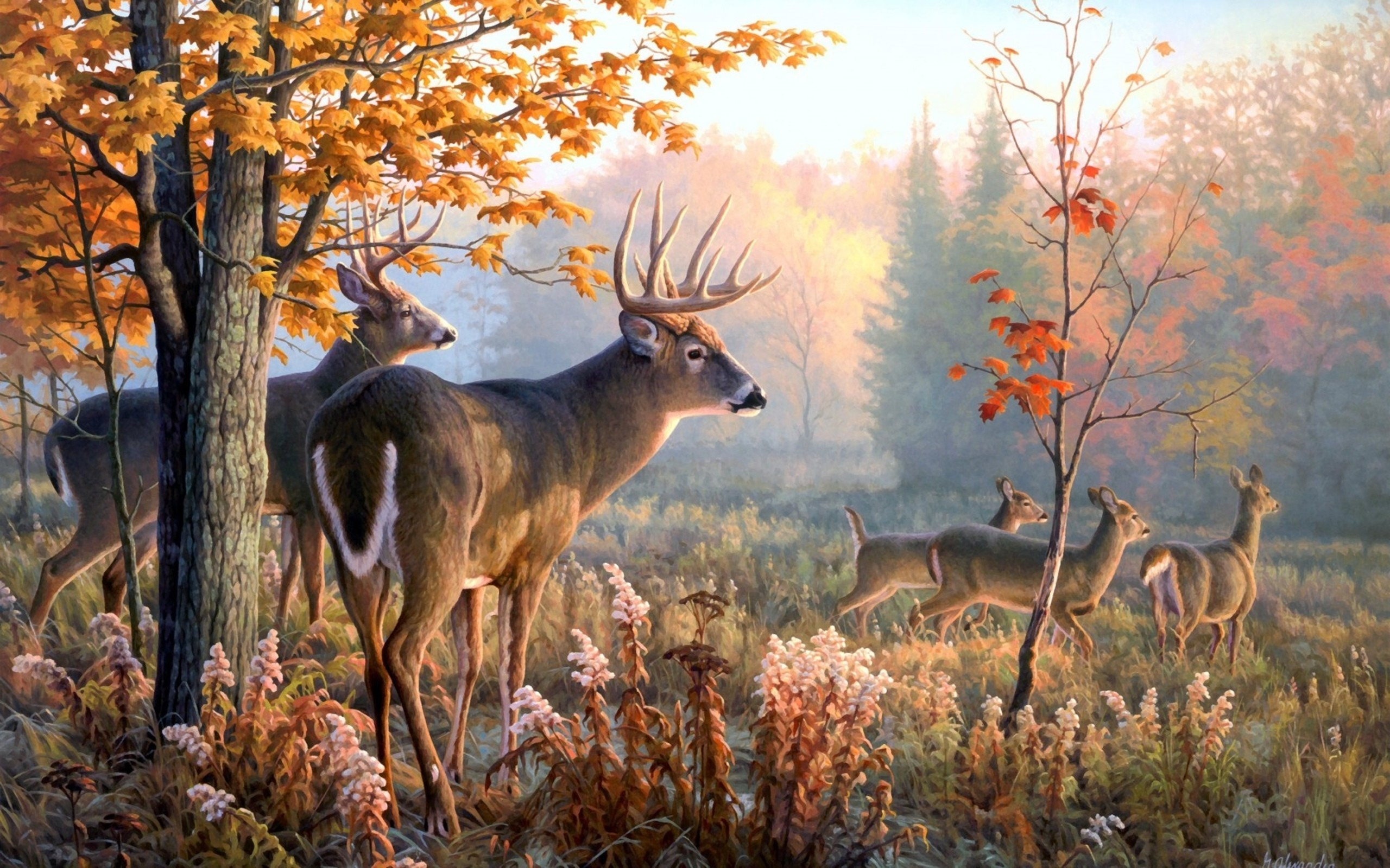 2560x1600 Deer Wallpaper 301562 1249.45 KB