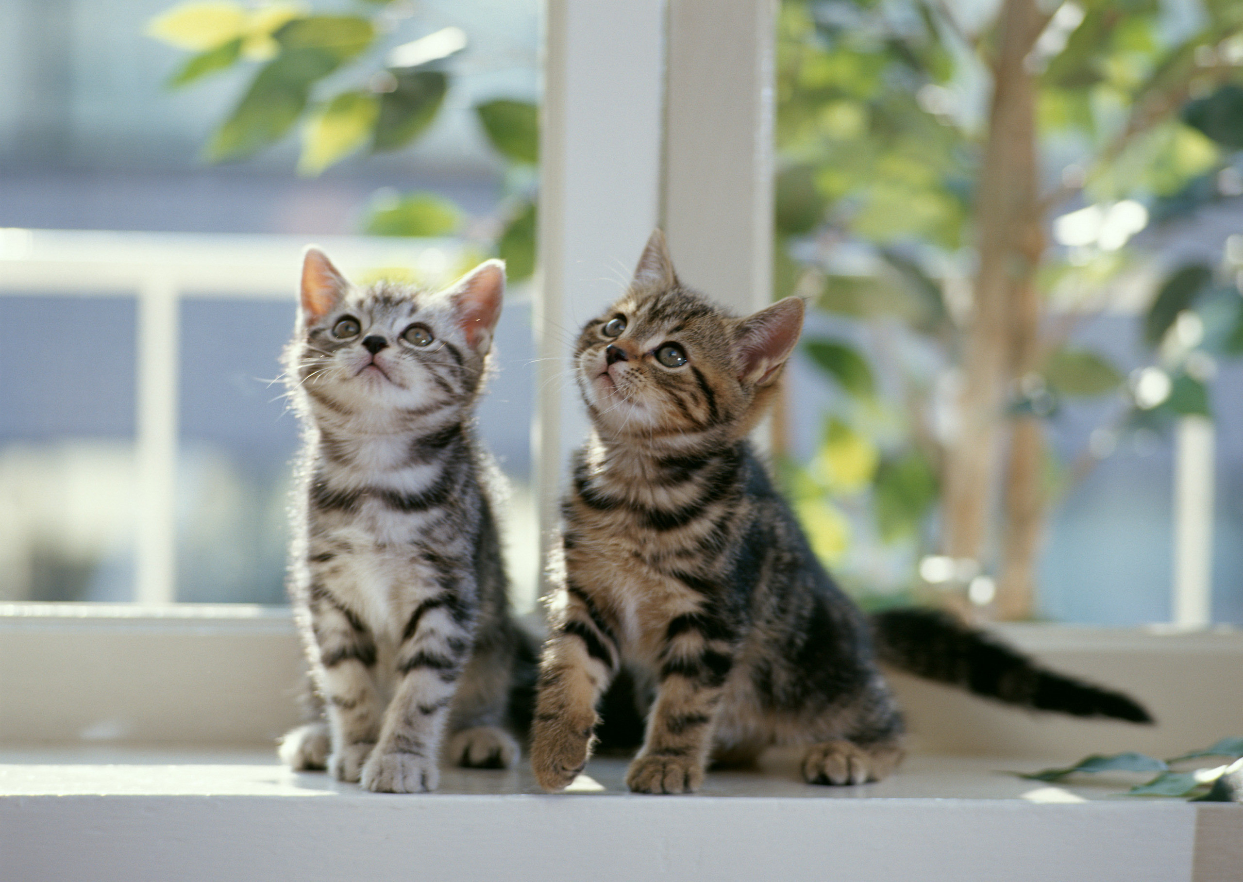 2560x1817 Cats images Kittens wallpaper photos (5979907)