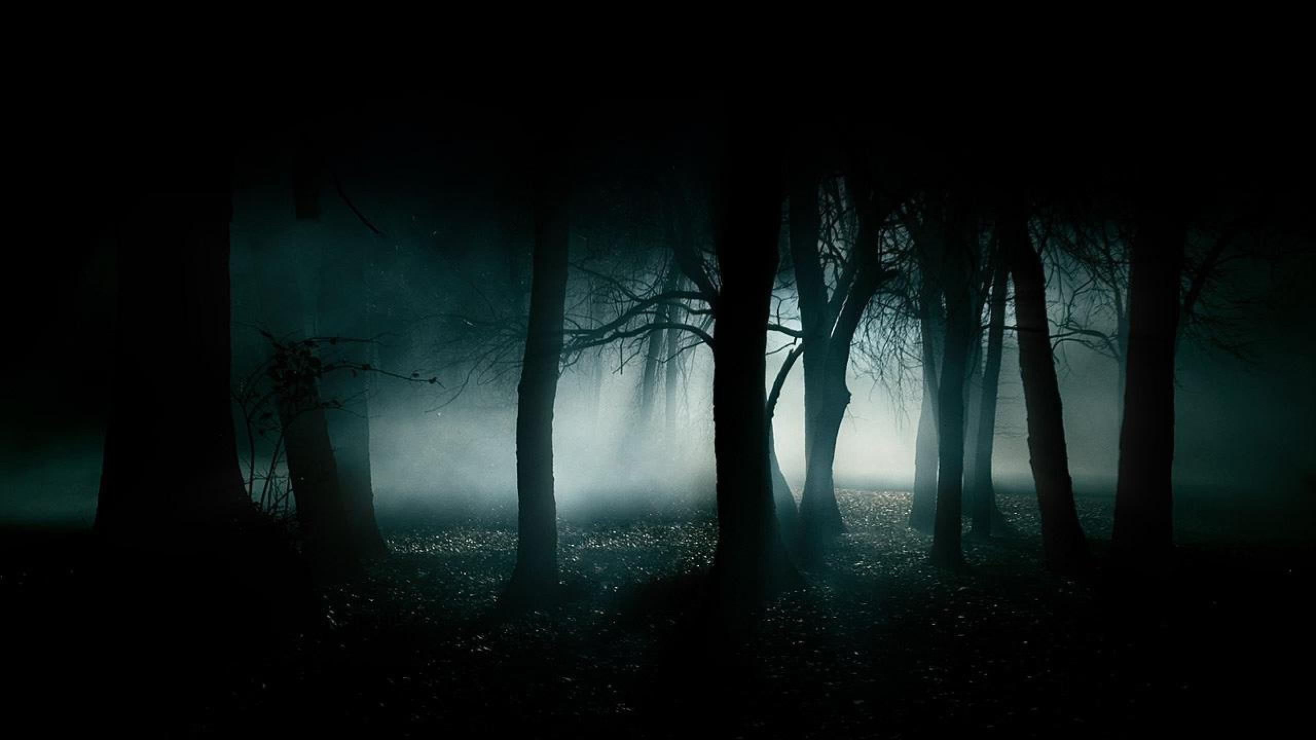 Dark Forest Hd Wallpaper 61 Images