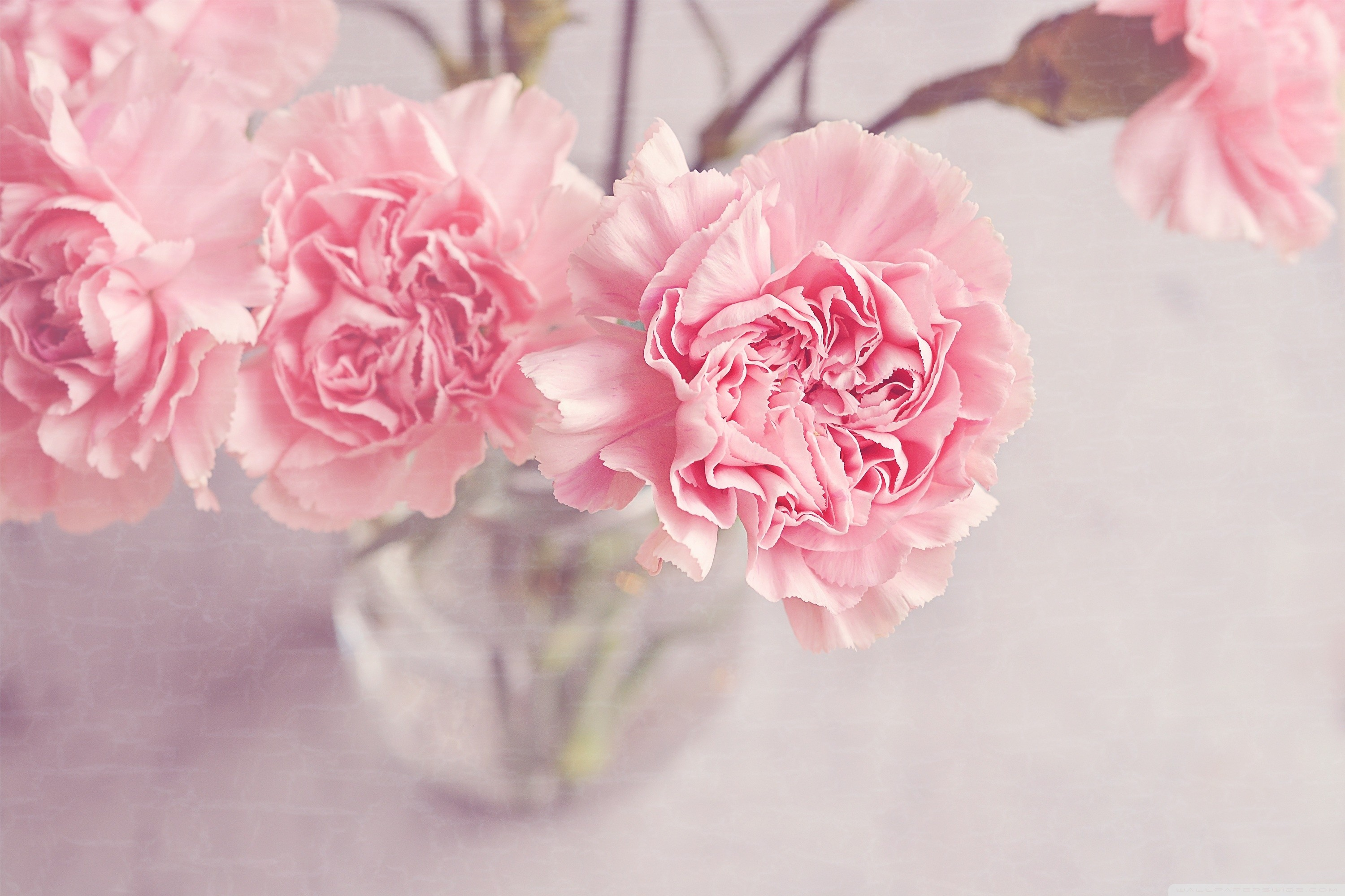 3000x2000 light_pink_carnations_flowers_in_a_vase-wallpaper.  light_pink_carnations_flowers_in_a_vase-wallpaper
