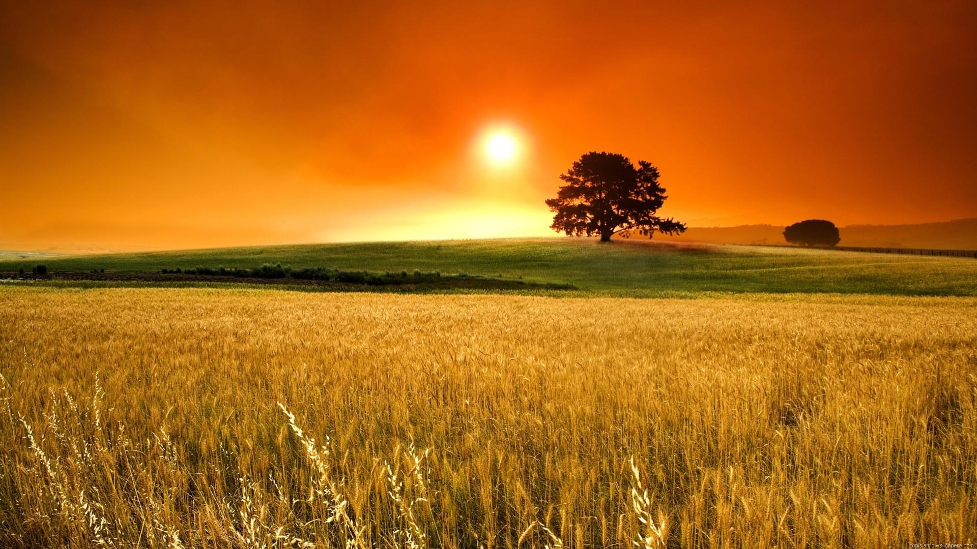 1920x1080 Beautiful Sunrise HD Wallpaper From Field