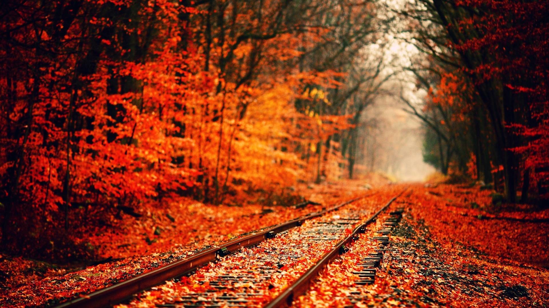 1920x1080 Fall HD Wallpapers - HD Wallpapers Inn