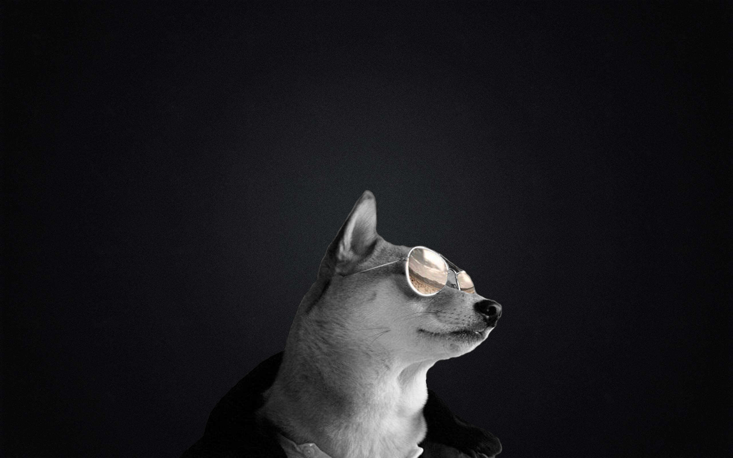 2560x1600 Badass doge with sunglasses wallpaper ...
