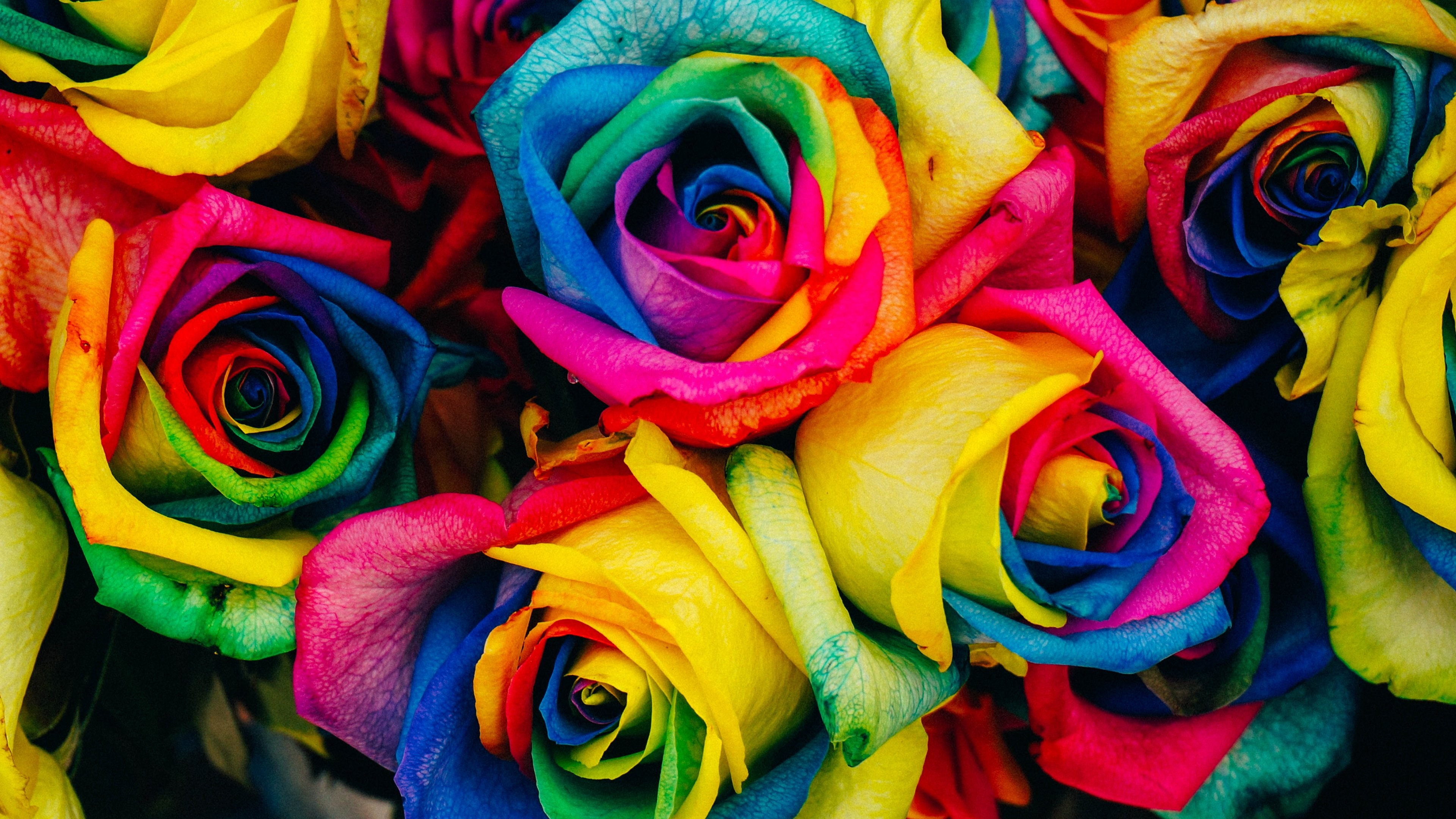 Rainbow Roses Wallpaper 48 Images