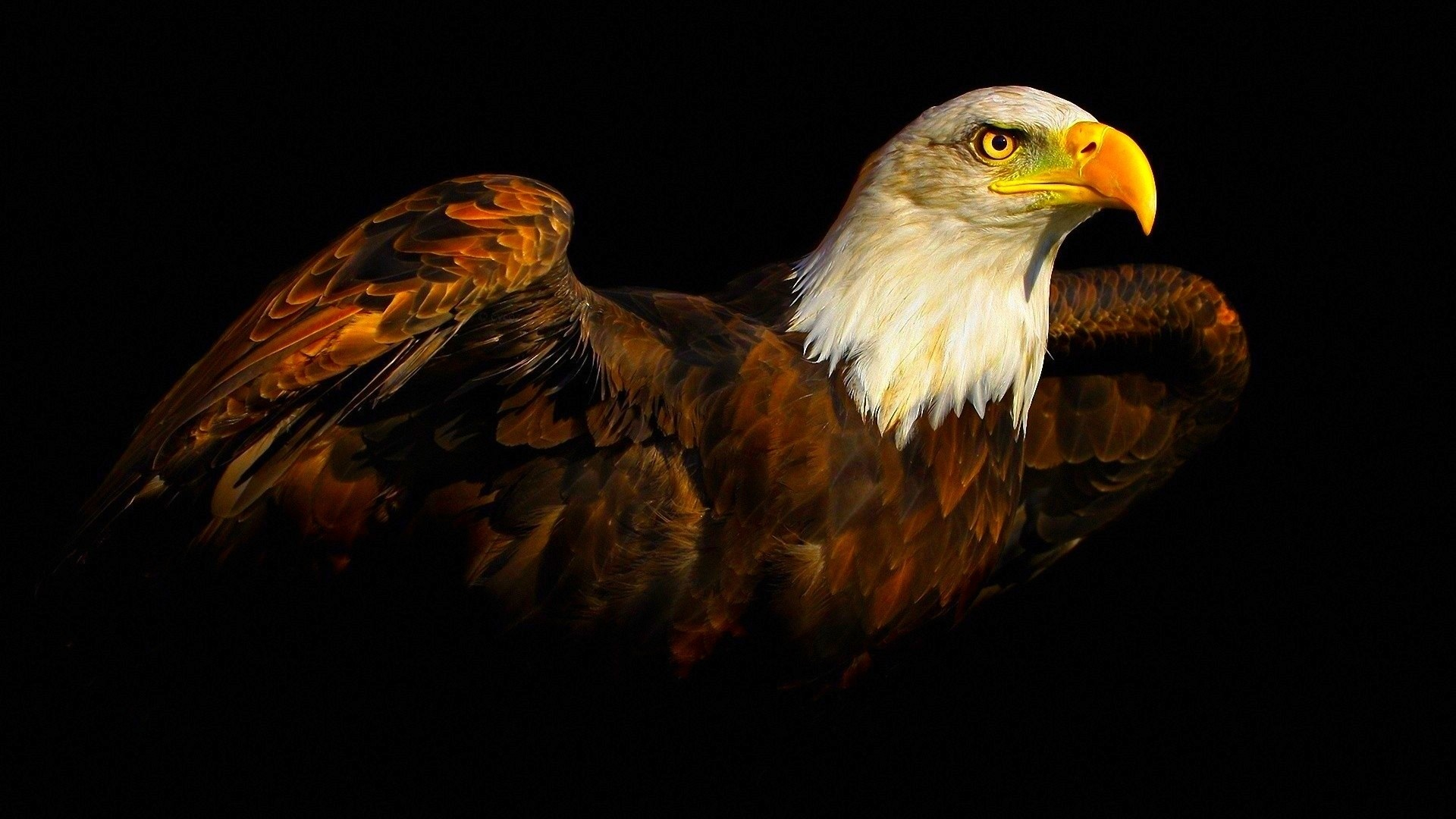 1920x1080 Eagle Wallpapers Free Download