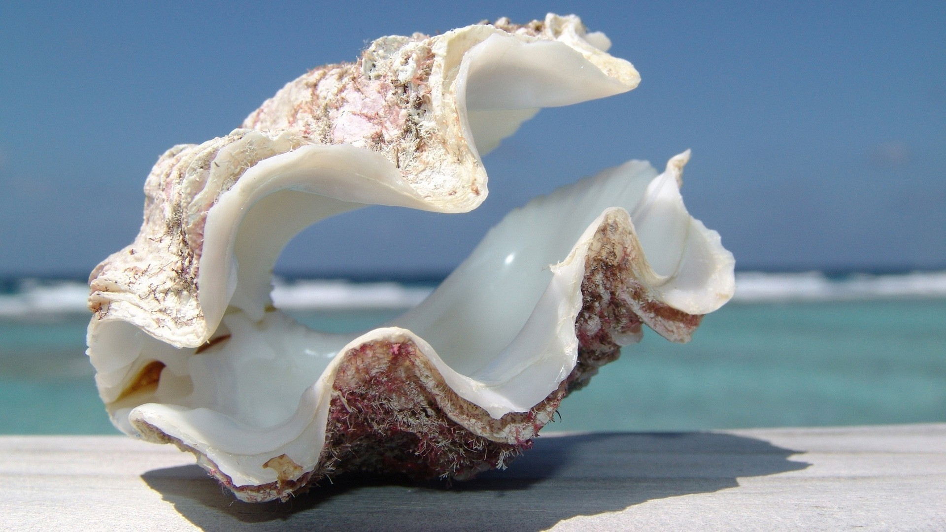 Seashell Desktop Wallpaper (54+ images)