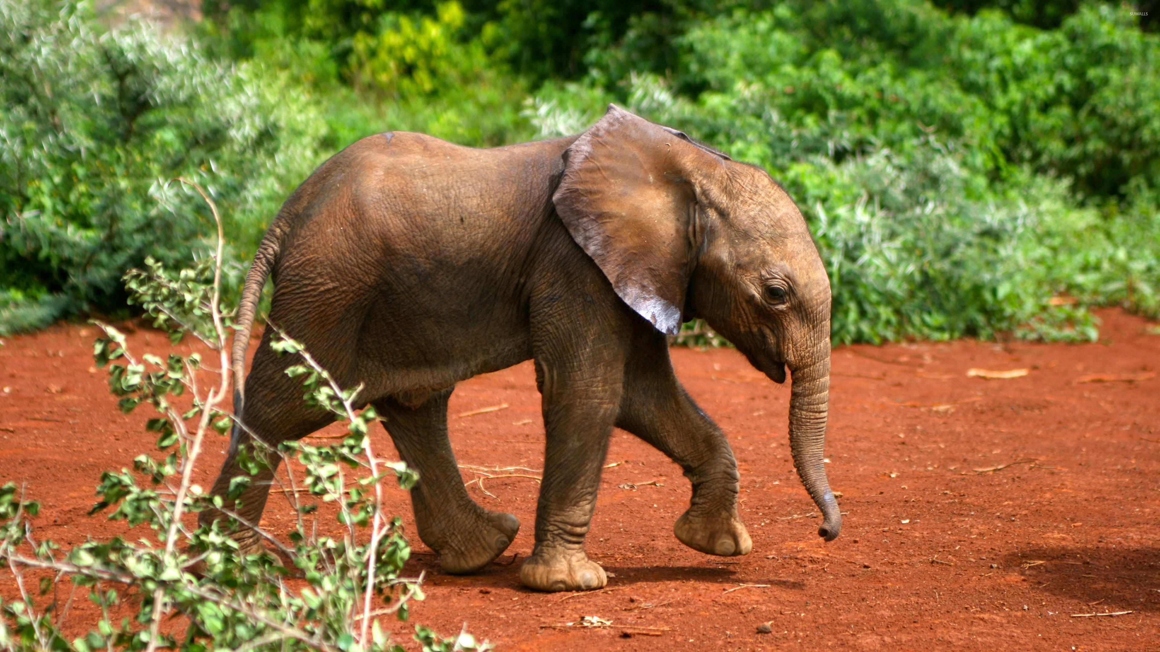 1920x1080 Explore Elephant Wallpaper Tiger And More Download