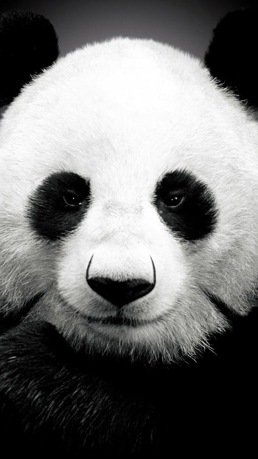 1080x1920 iPhone 6 plus Panda HD Wallpaper