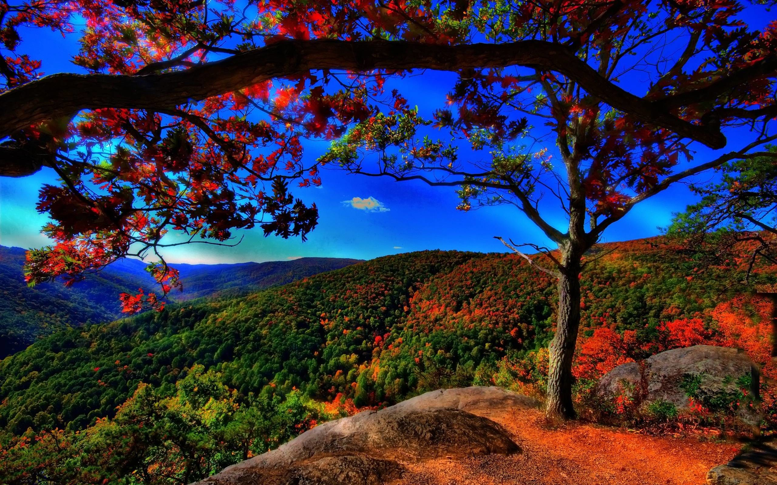 2560x1600 autumn free wallpaper autumn landscape - flipped | Images And ..