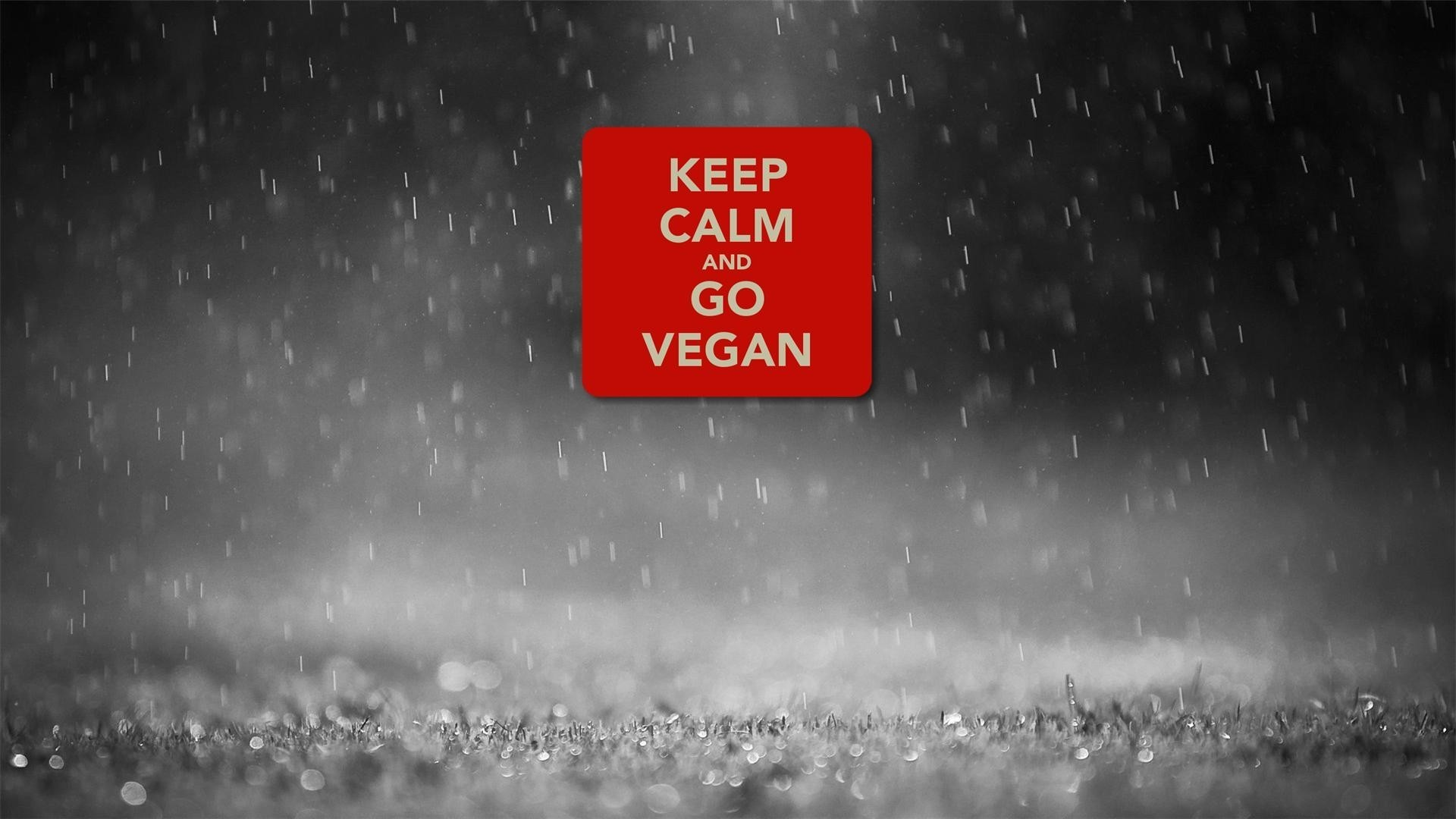 1920x1080 Keep calm and go vegan wallpaper