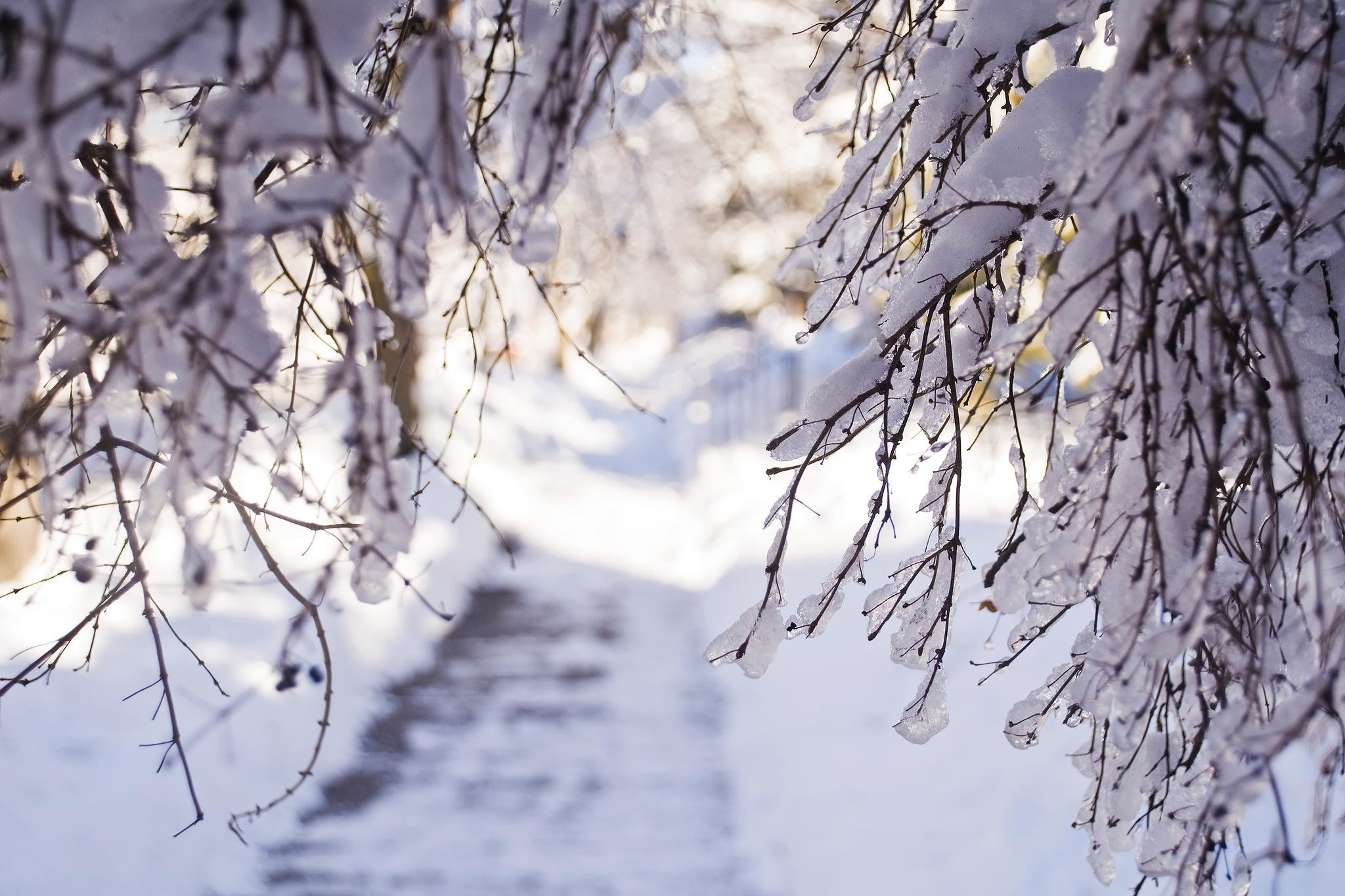 2048x1365 Winter Snow Branches Light Desktop Background Images