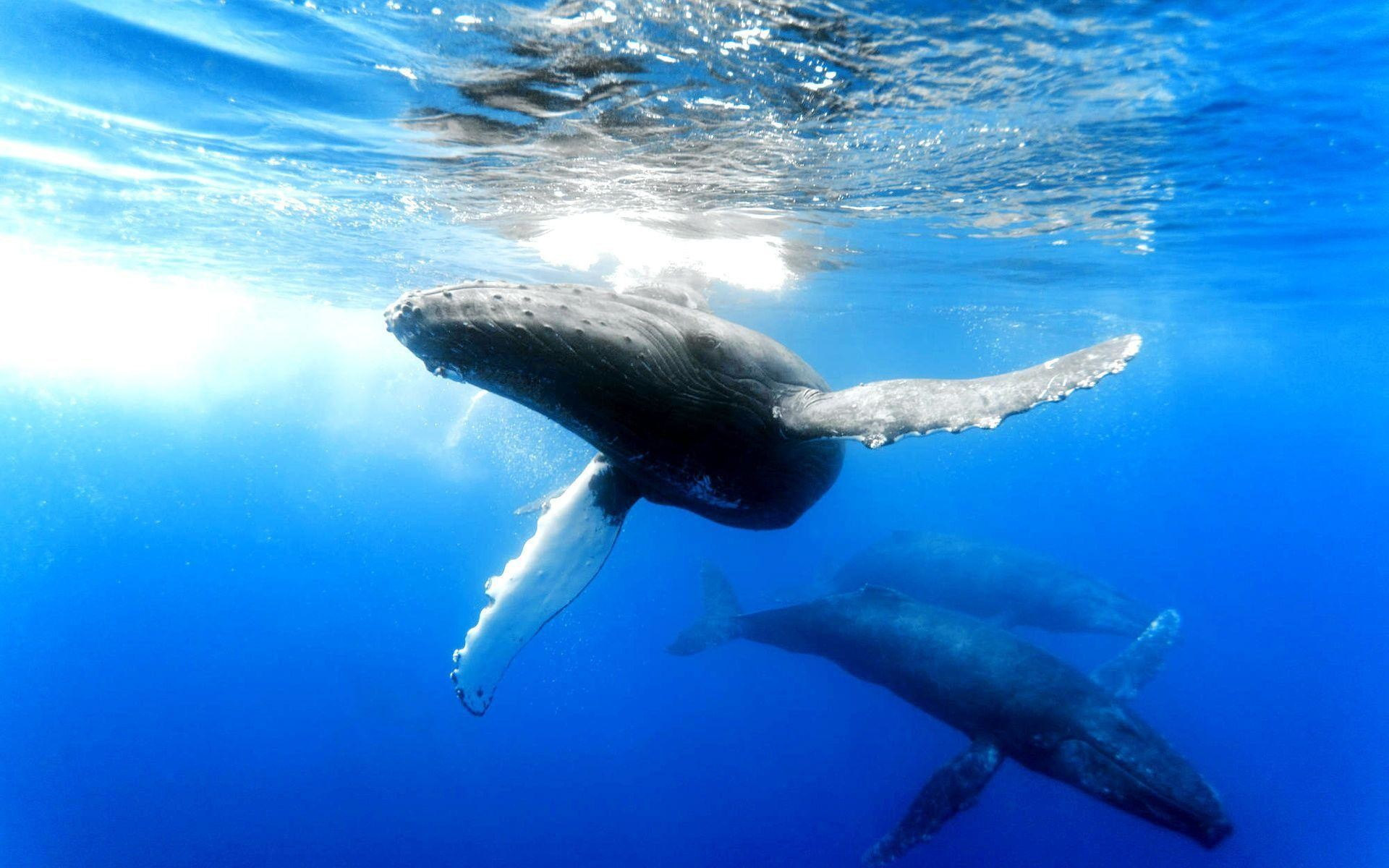 1920x1200 93 Whale Wallpapers | Whale Backgrounds Page 3