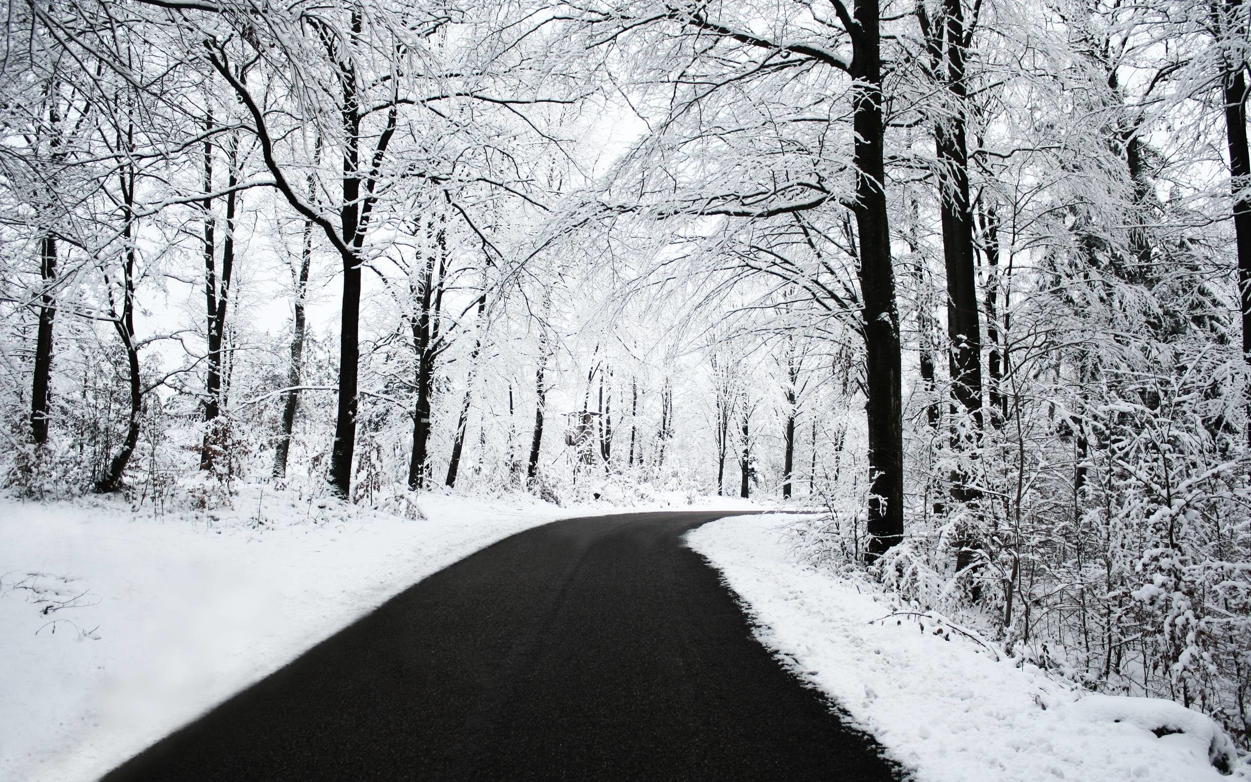 Wallpaper winter scenes 58 images 2560x1600 free images winter scenes voltagebd Image collections