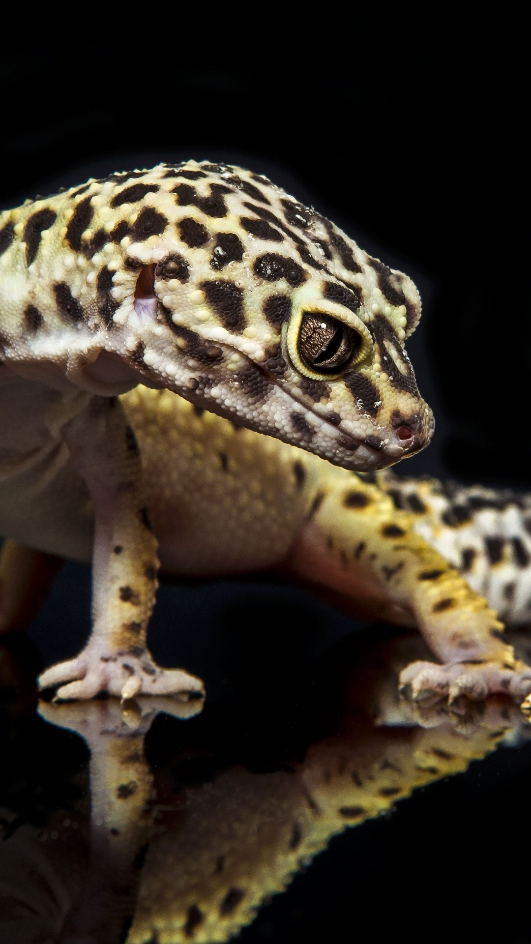Leopard Gecko Wallpaper 59 Images