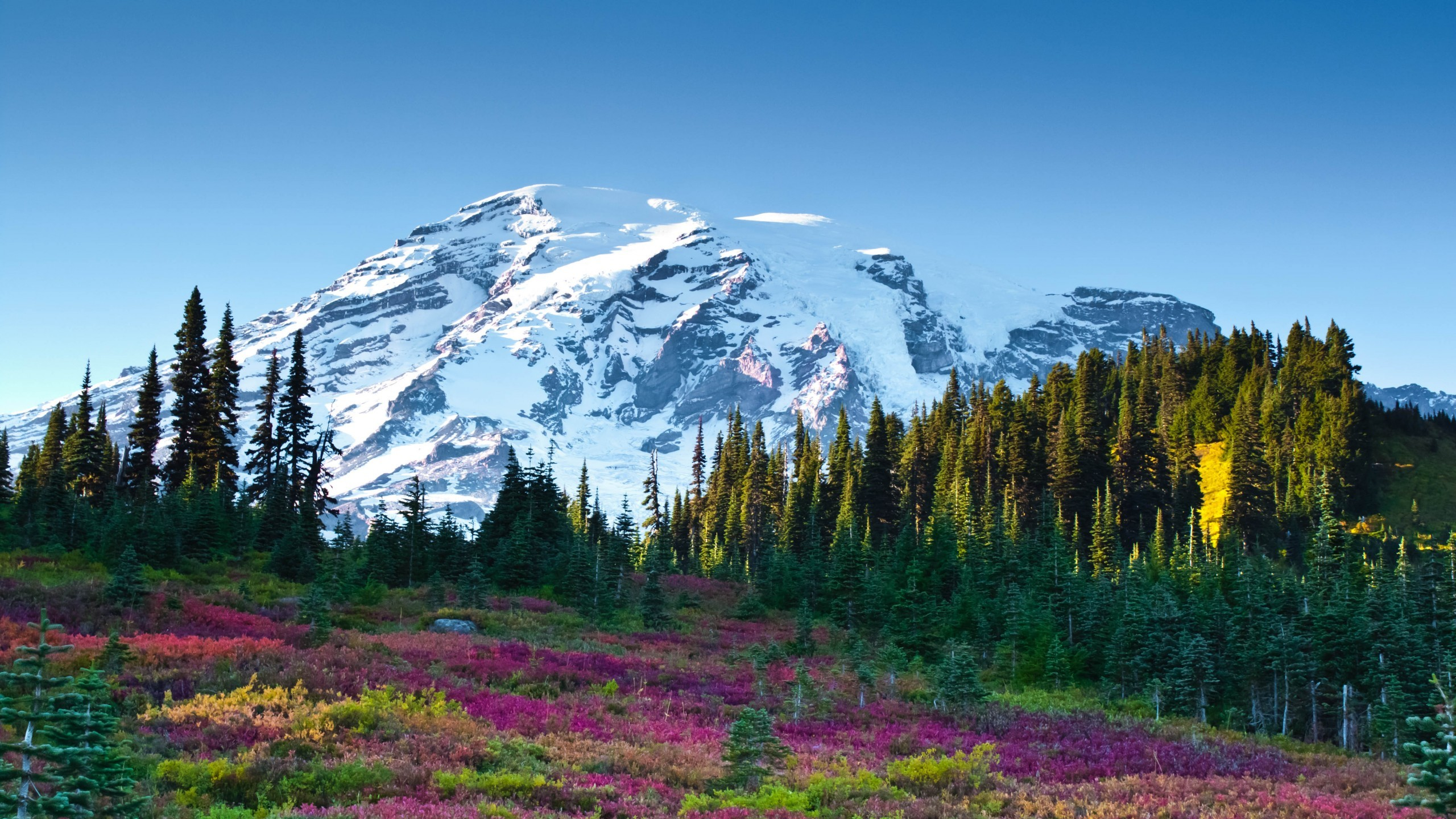 2560x1440 Nature / Mount Adams Wallpaper