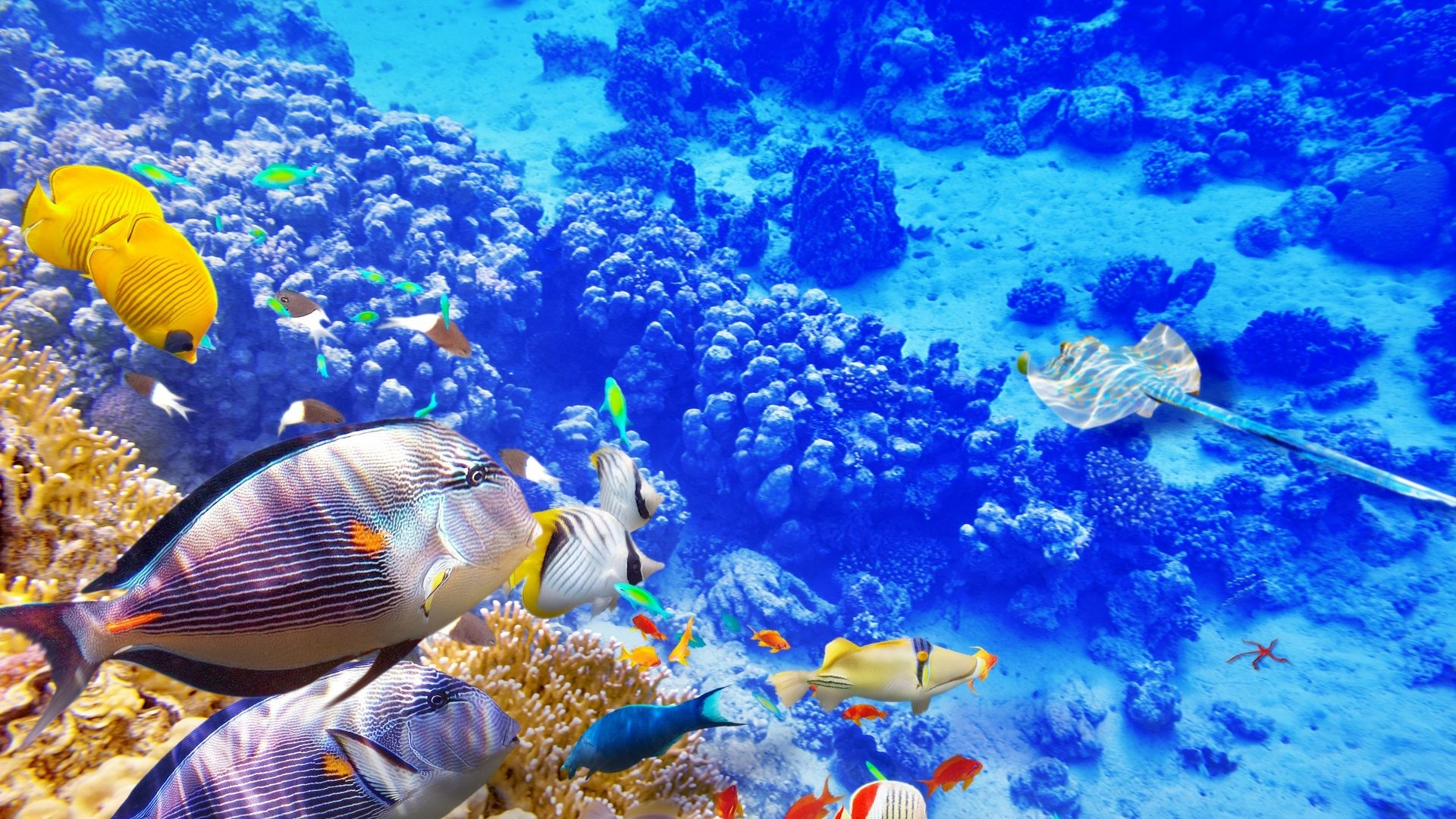 1920x1080 Reef Tag - Ocean Reef World Coral Underwater Fish Wallpapers Desktop  Background Nature for HD 16