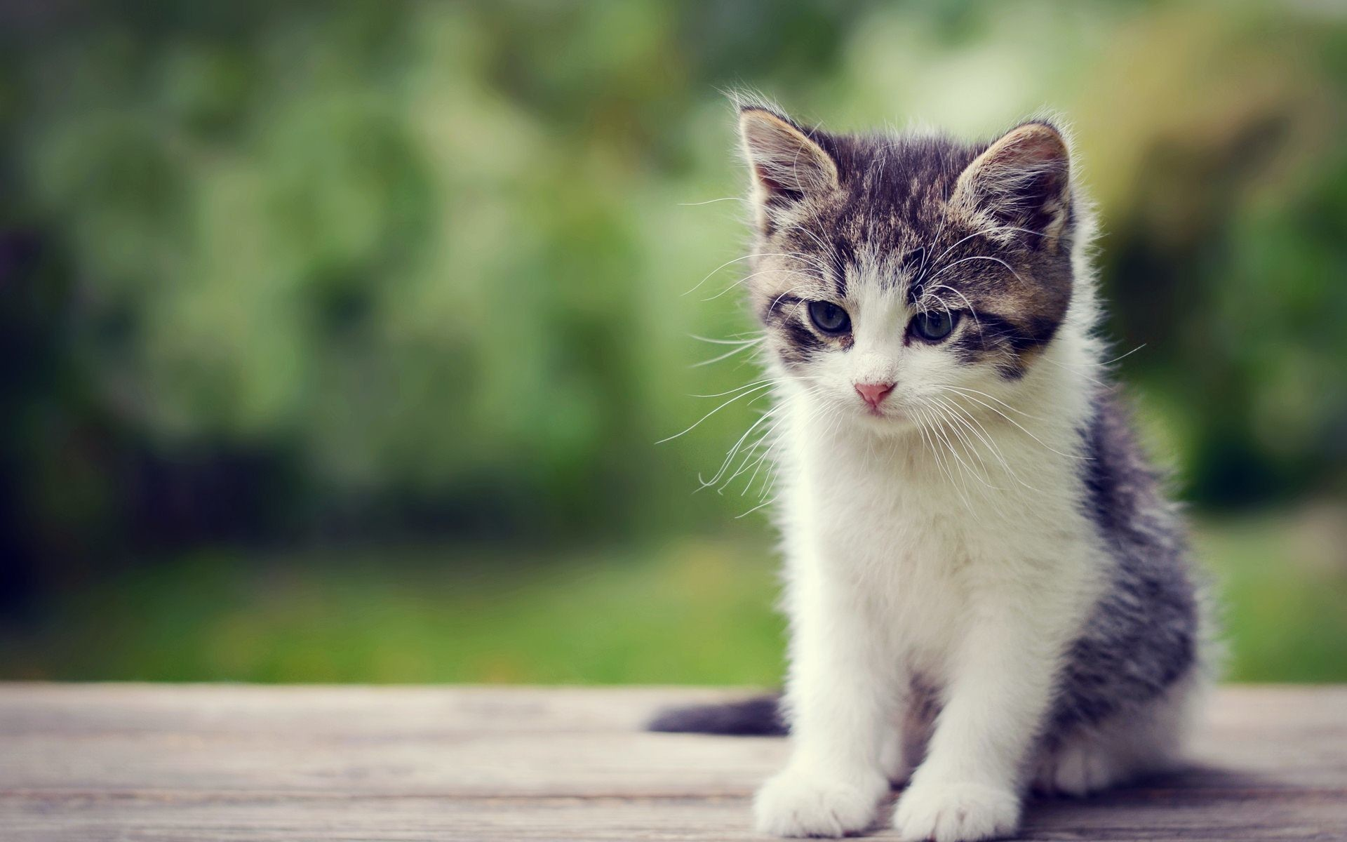 1920x1200 Cute Little Kitten Exclusive HD Wallpapers #6811