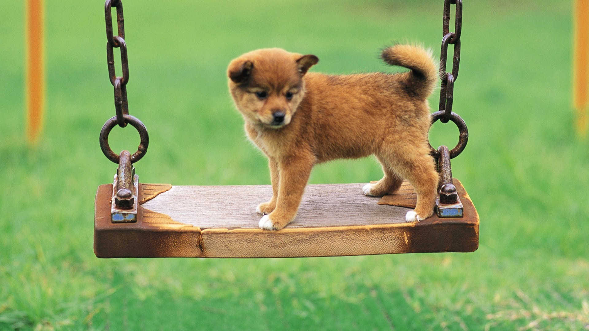 Cute Dog Backgrounds 52 Images