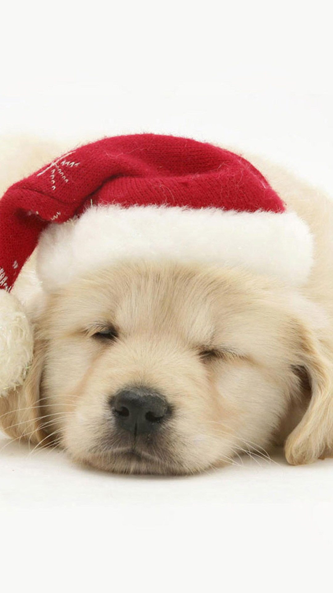 1080x1920 Cute Puppy In Christmas Hat iPhone 6 wallpaper