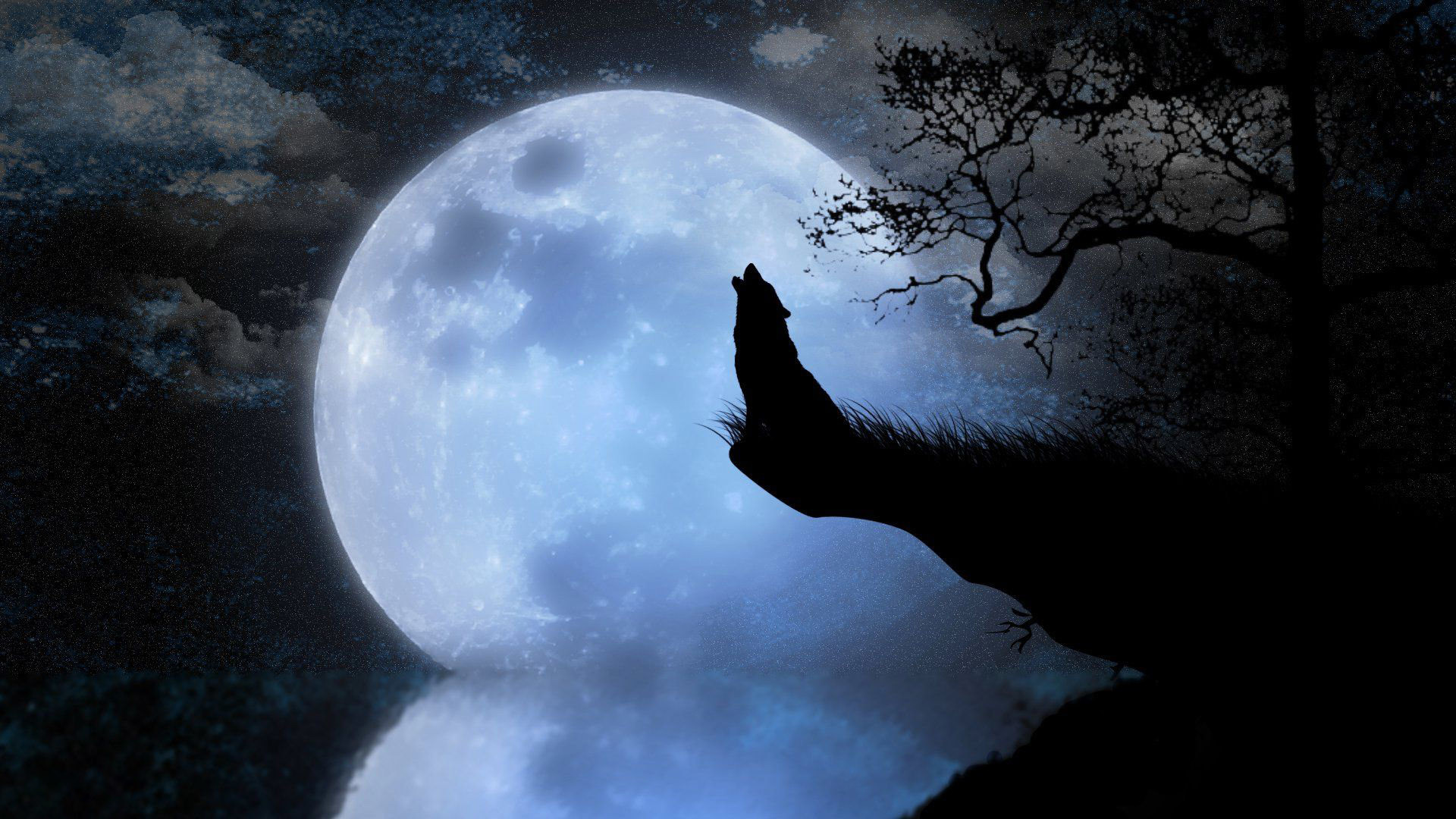 1920x1080 Howling wolf HD Wallpaper