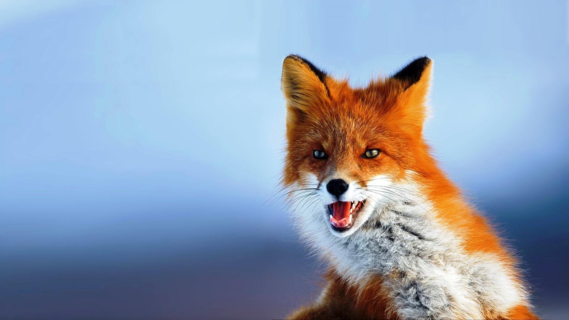 Desktop images animals