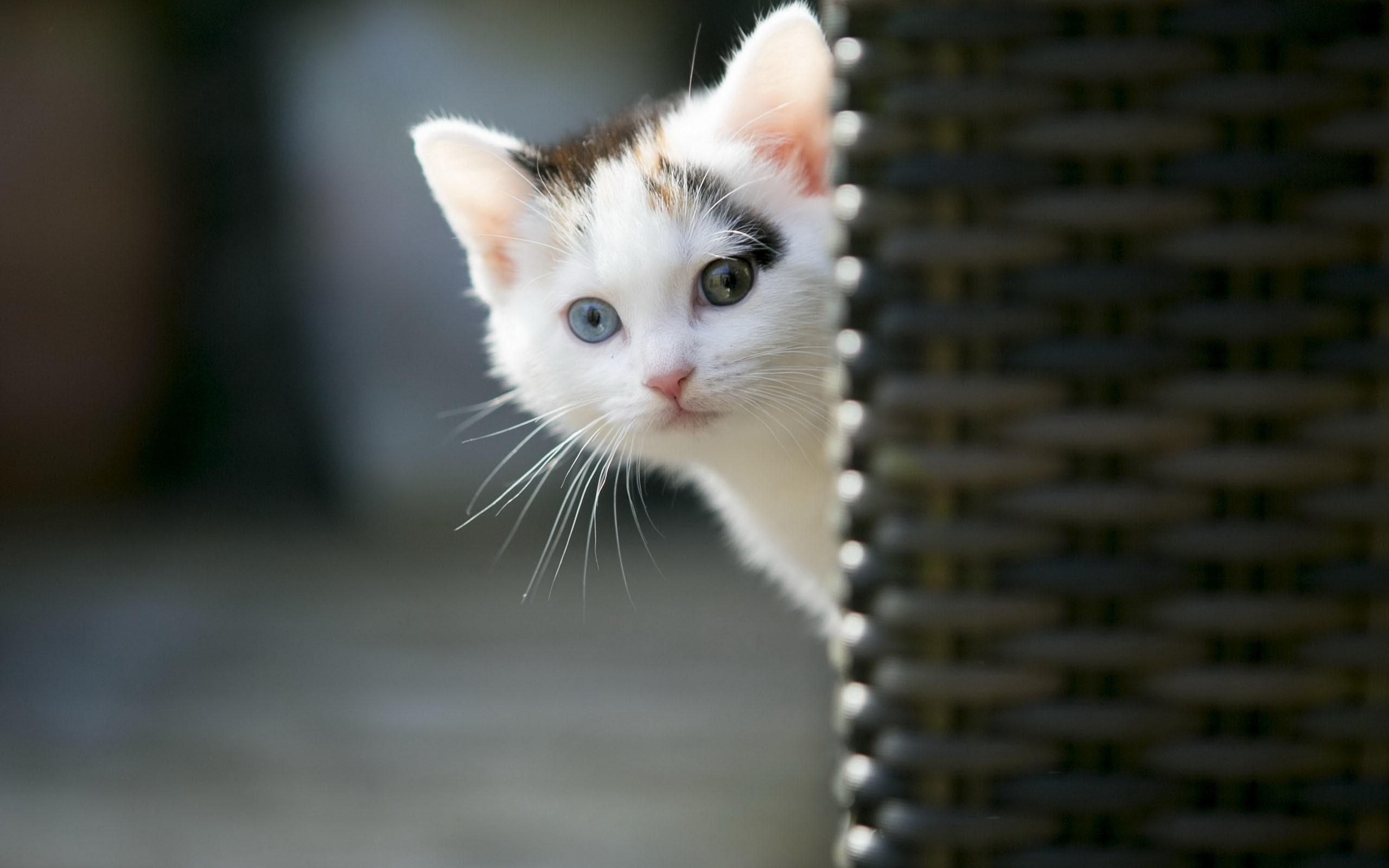 Cute animal wallpapers for desktop 54 images - Cute kittens hd wallpaper free download ...