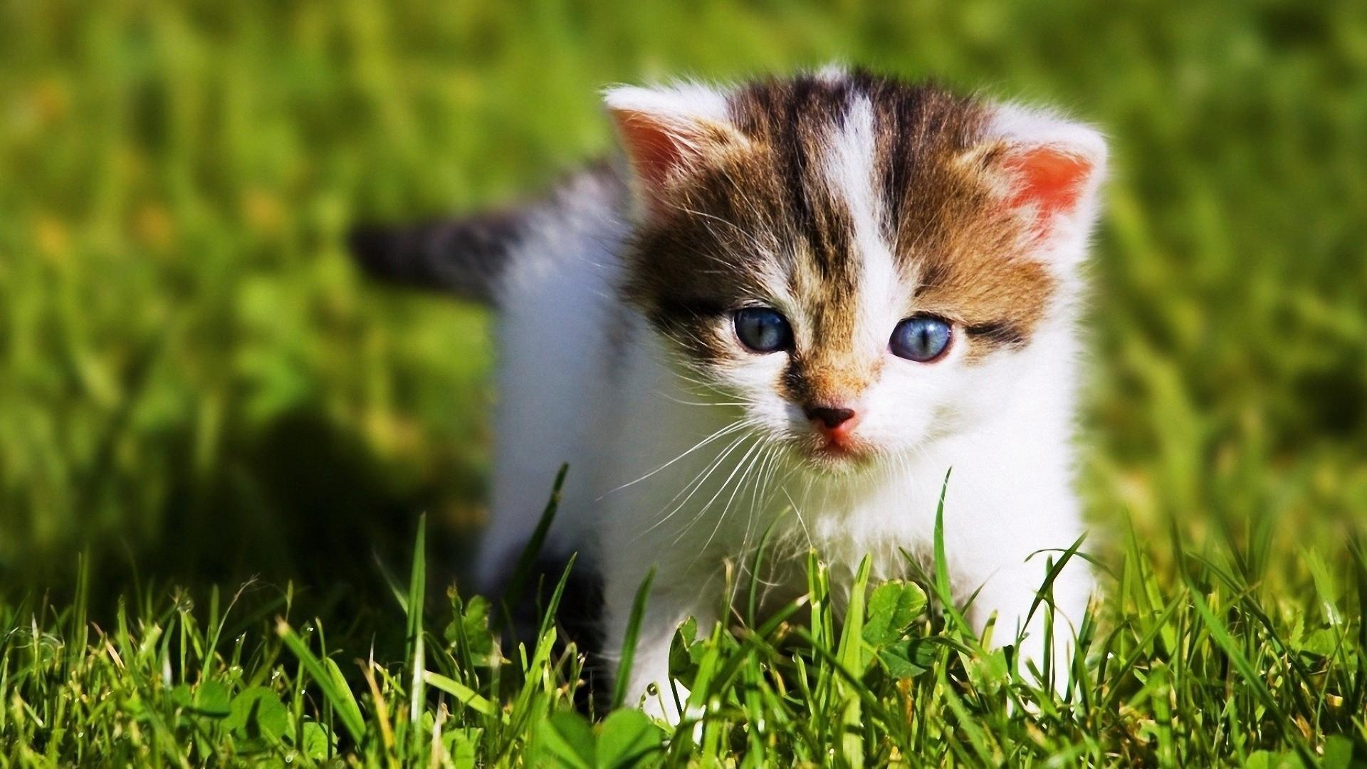 Baby Animal Wallpaper for Desktop (57+ images)