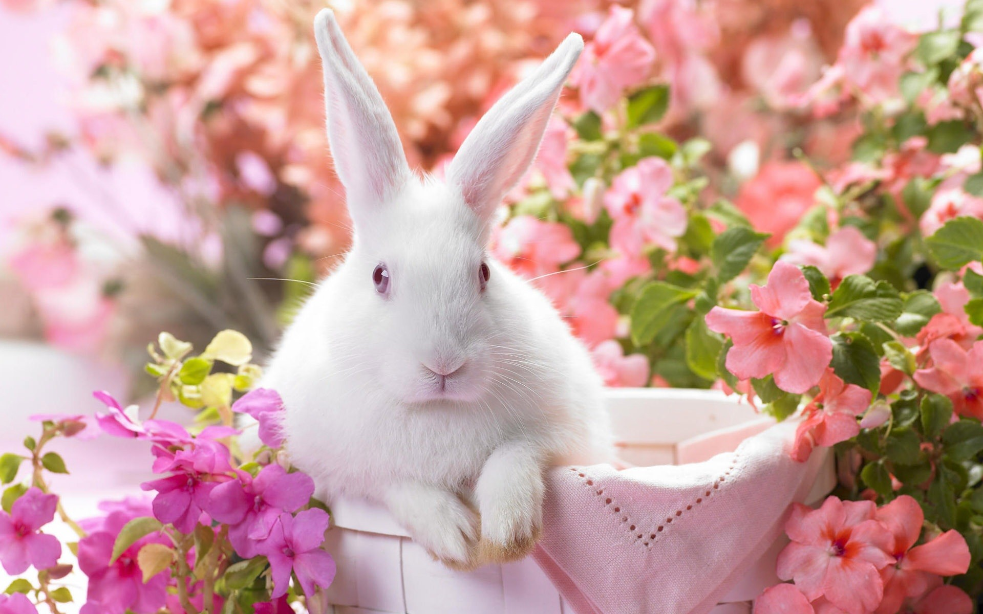 2560x1600 Rabbit Wallpapers Free Download Cute White HD Desktop Wide Images