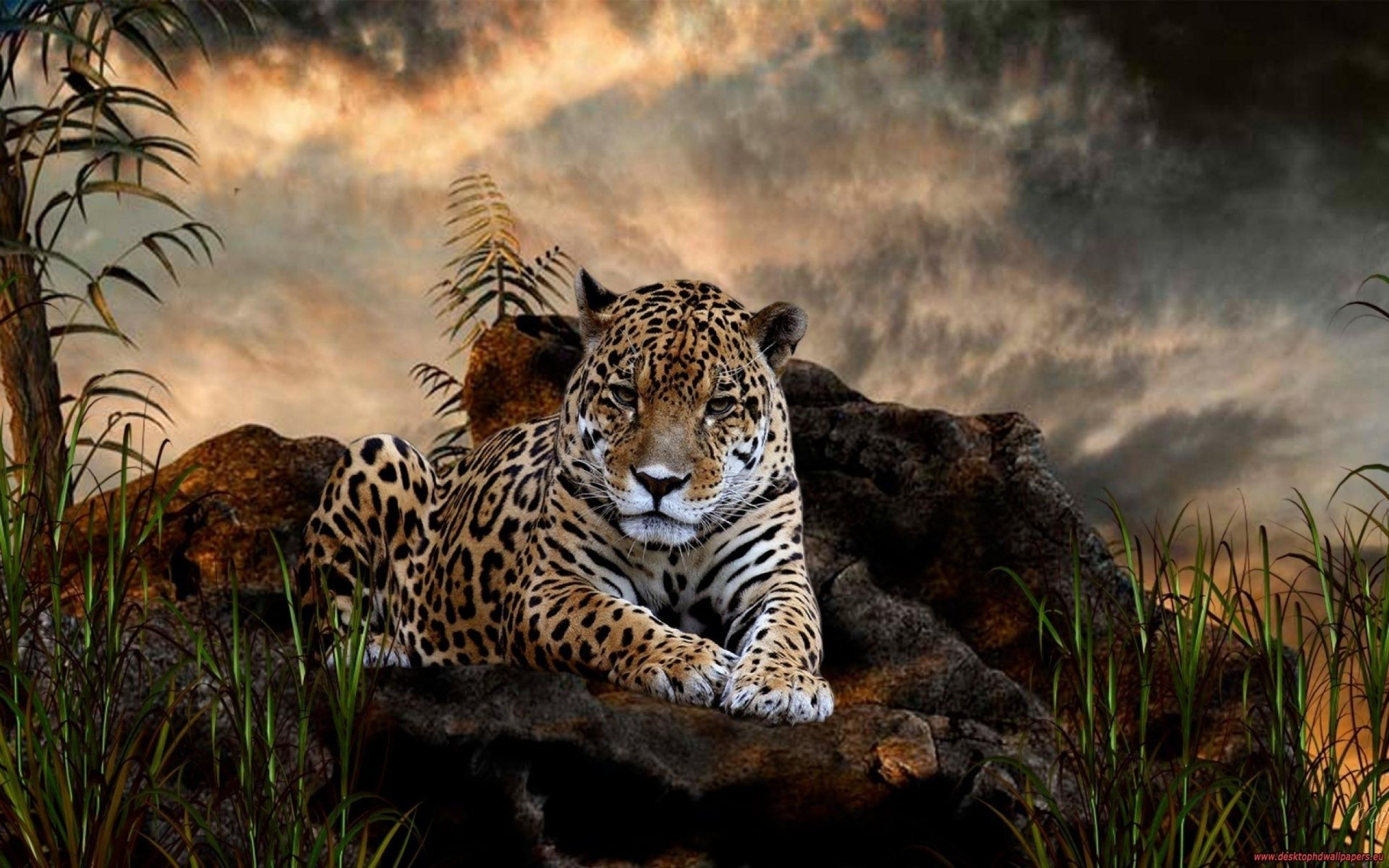 2560x1600 Cool Wildlife Animals Wallpaper Dark
