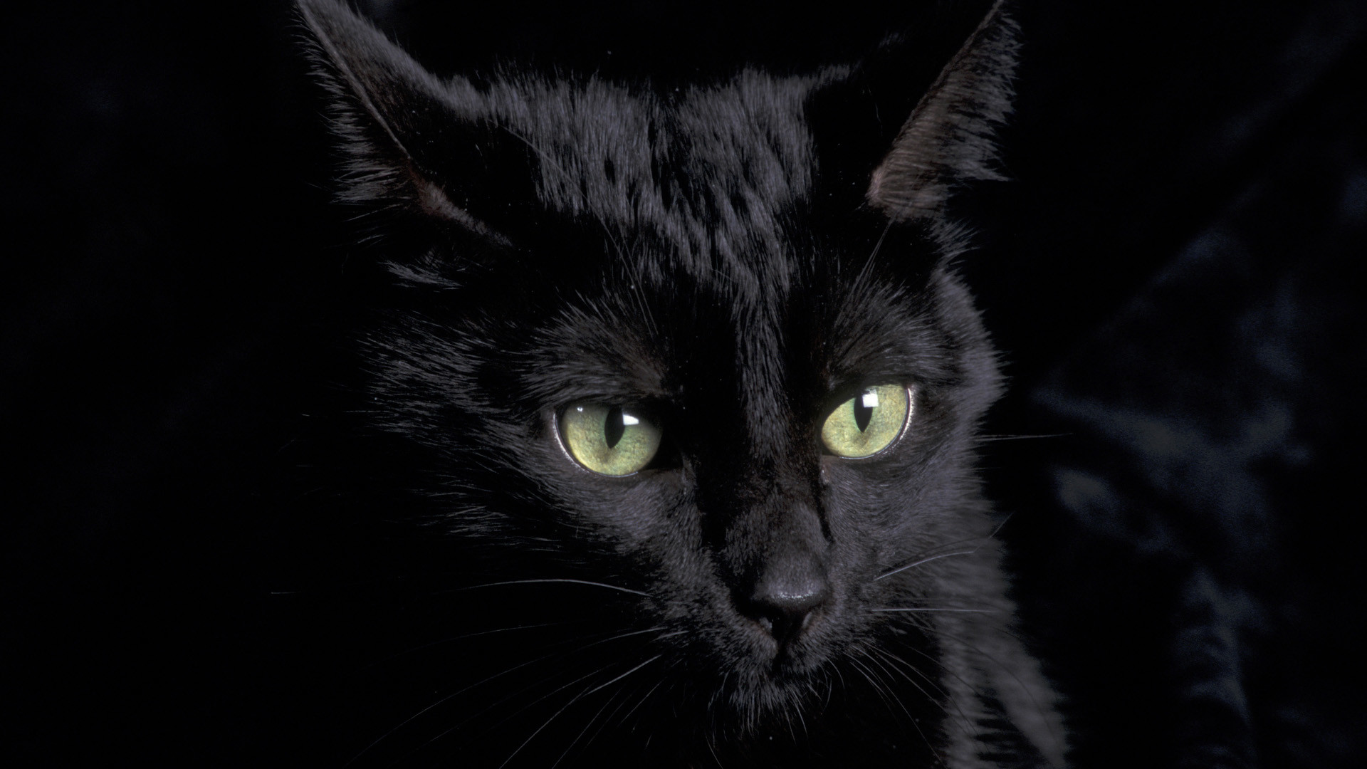 885661 black cat background 1920x1080 for mobile hd