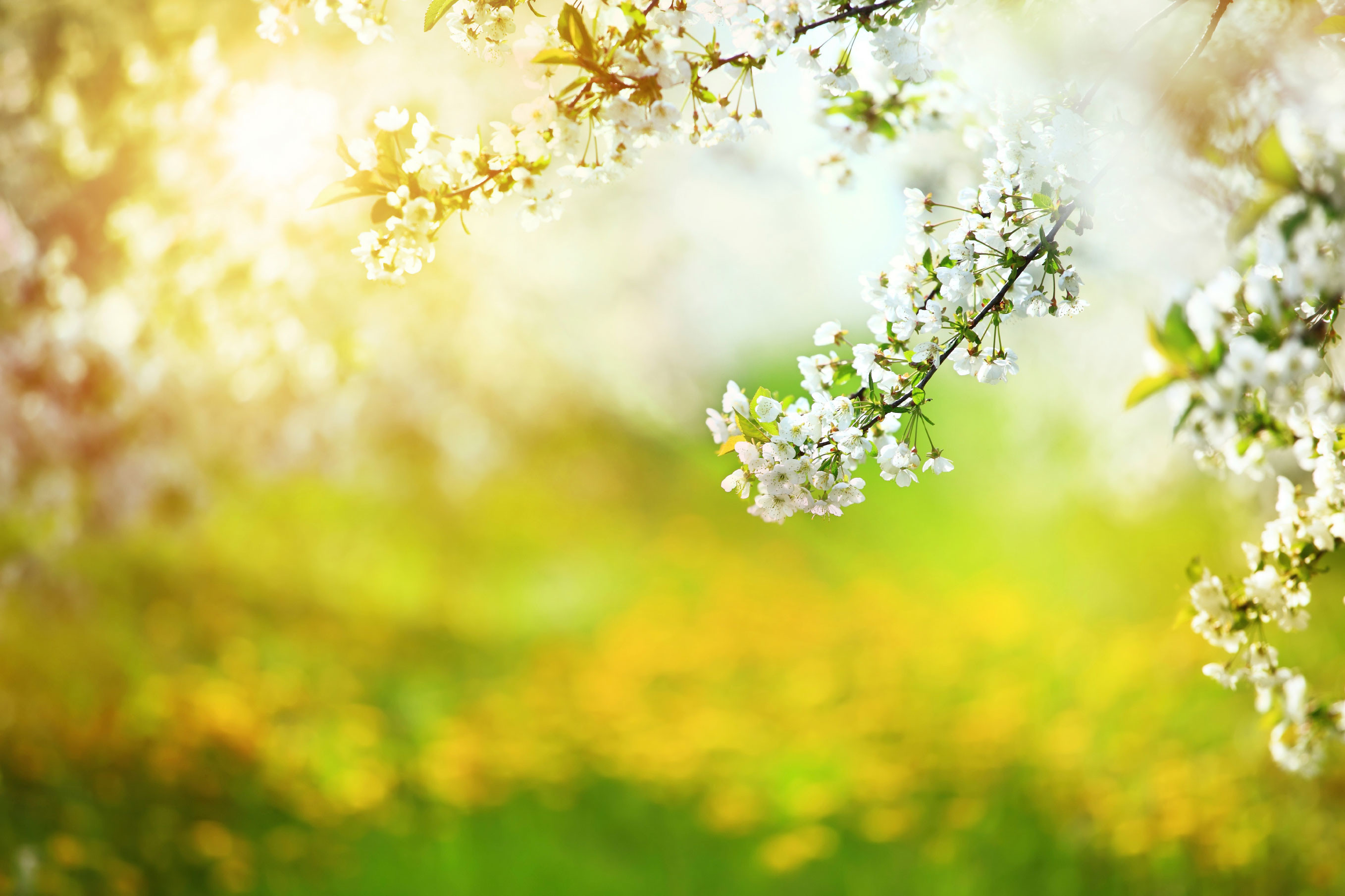 Funeral Background Pic...